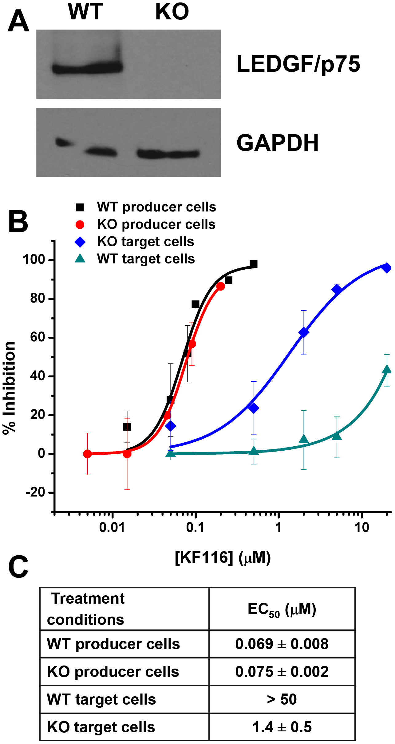 LEDGF/p75 expression does not affect KF116 potency during late stage of HIV-1 replication.