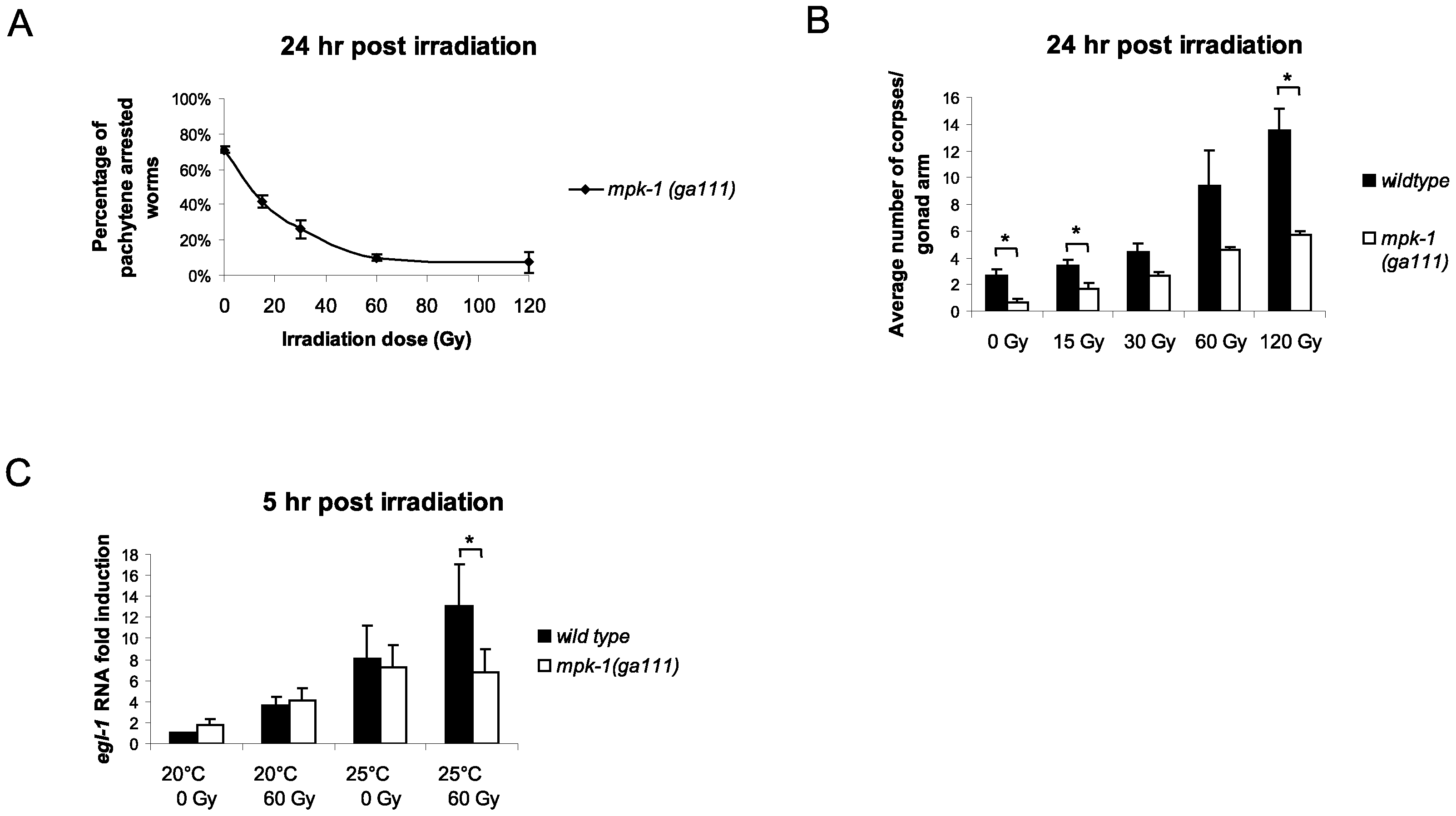 MPK-1 is activated following irradiation and is required for IR–induced <i>egl-1</i> transcription.