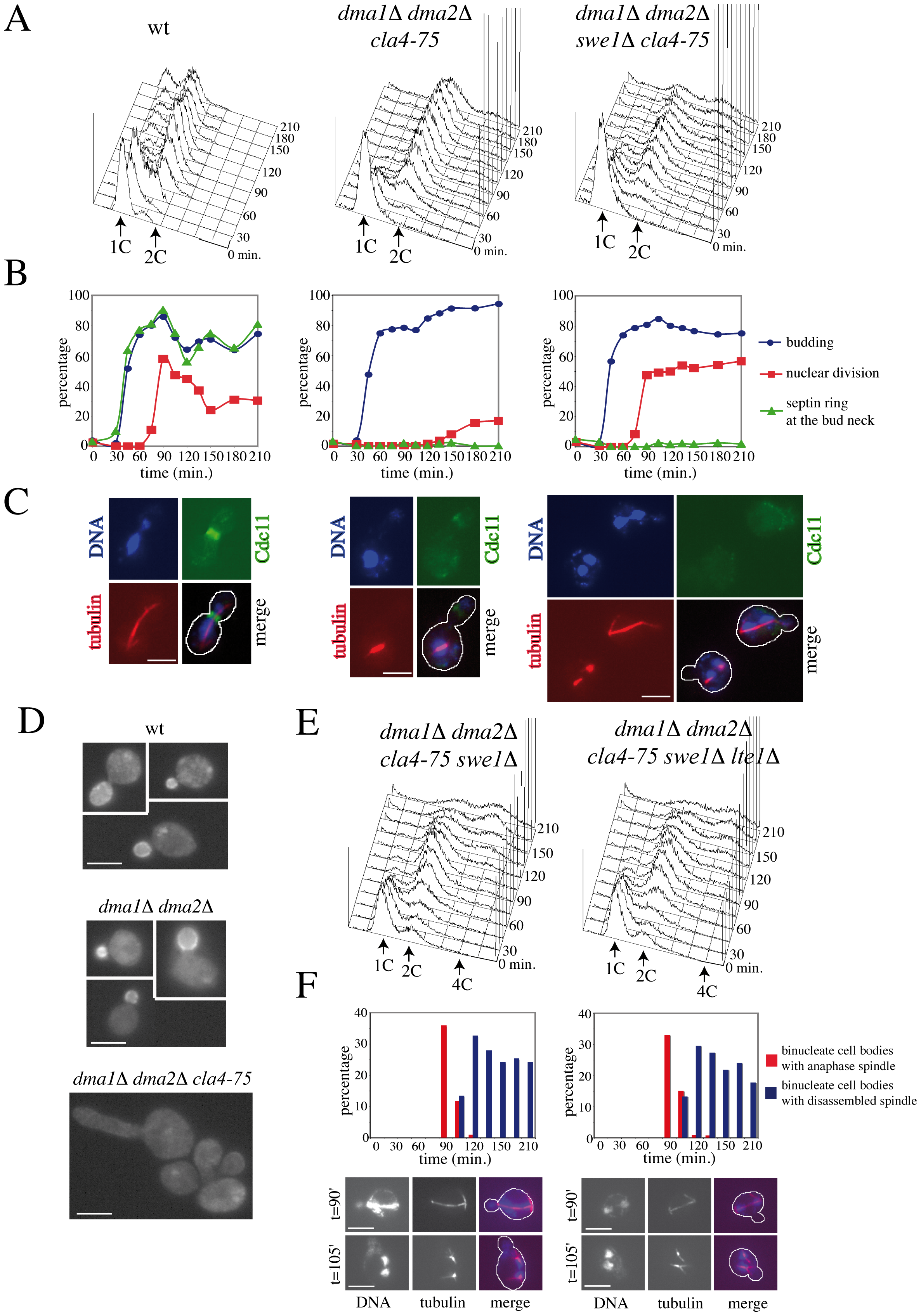 Morphogenesis checkpoint and SPOC response to spindle mispositioning in cells lacking Dma proteins and Cla4.