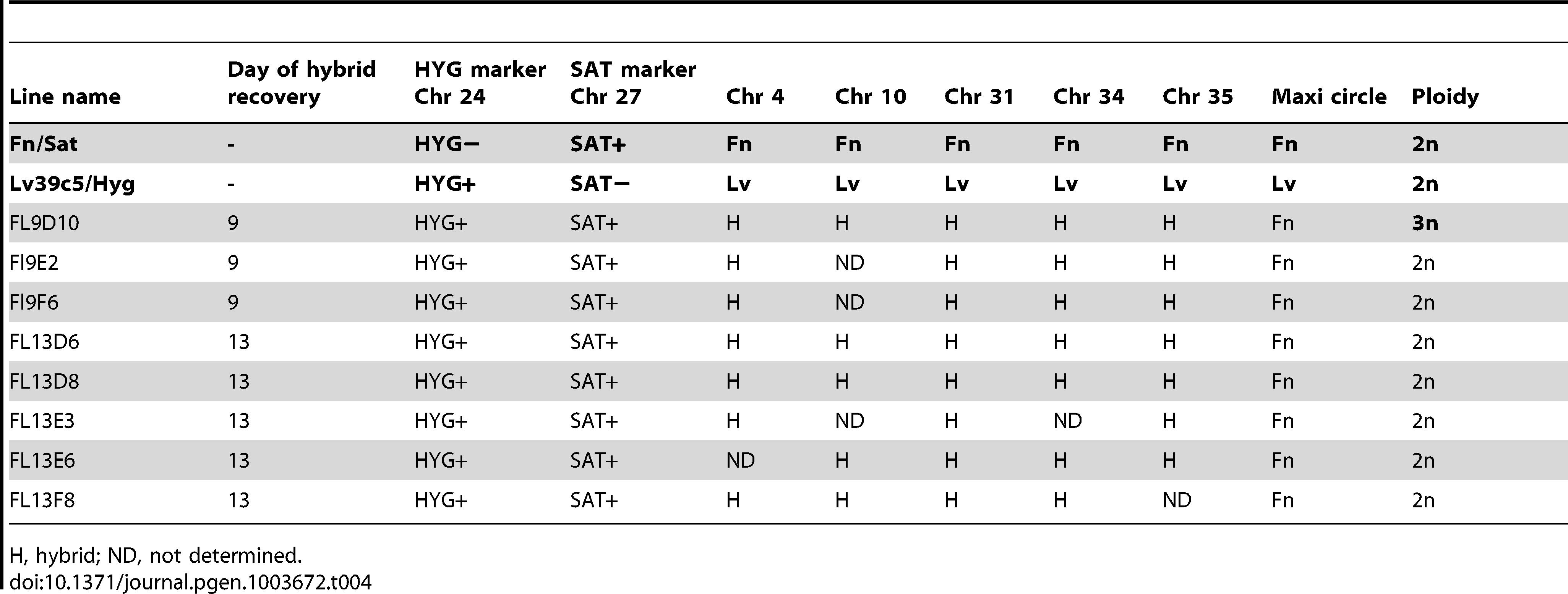 Summary of Fn/Sat×LV39c5/Hyg hybrid genotypes generated in <i>P. duboscqi</i>.