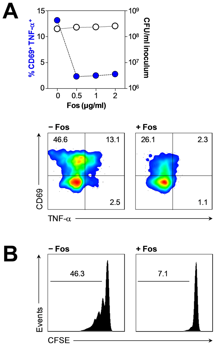 Abrogation of HMB-PP dependent γδ T cell responses by fosmidomycin.