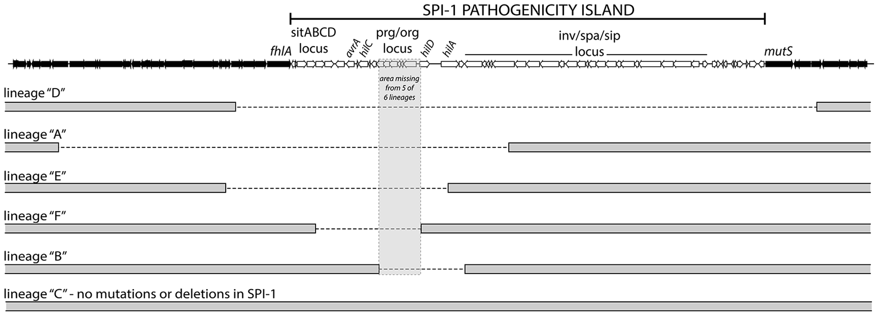 <i>S.</i> Typhimurium <i>hns</i> mutant lineages acquired large chromosomal deletions in the SPI-1 invasion locus.