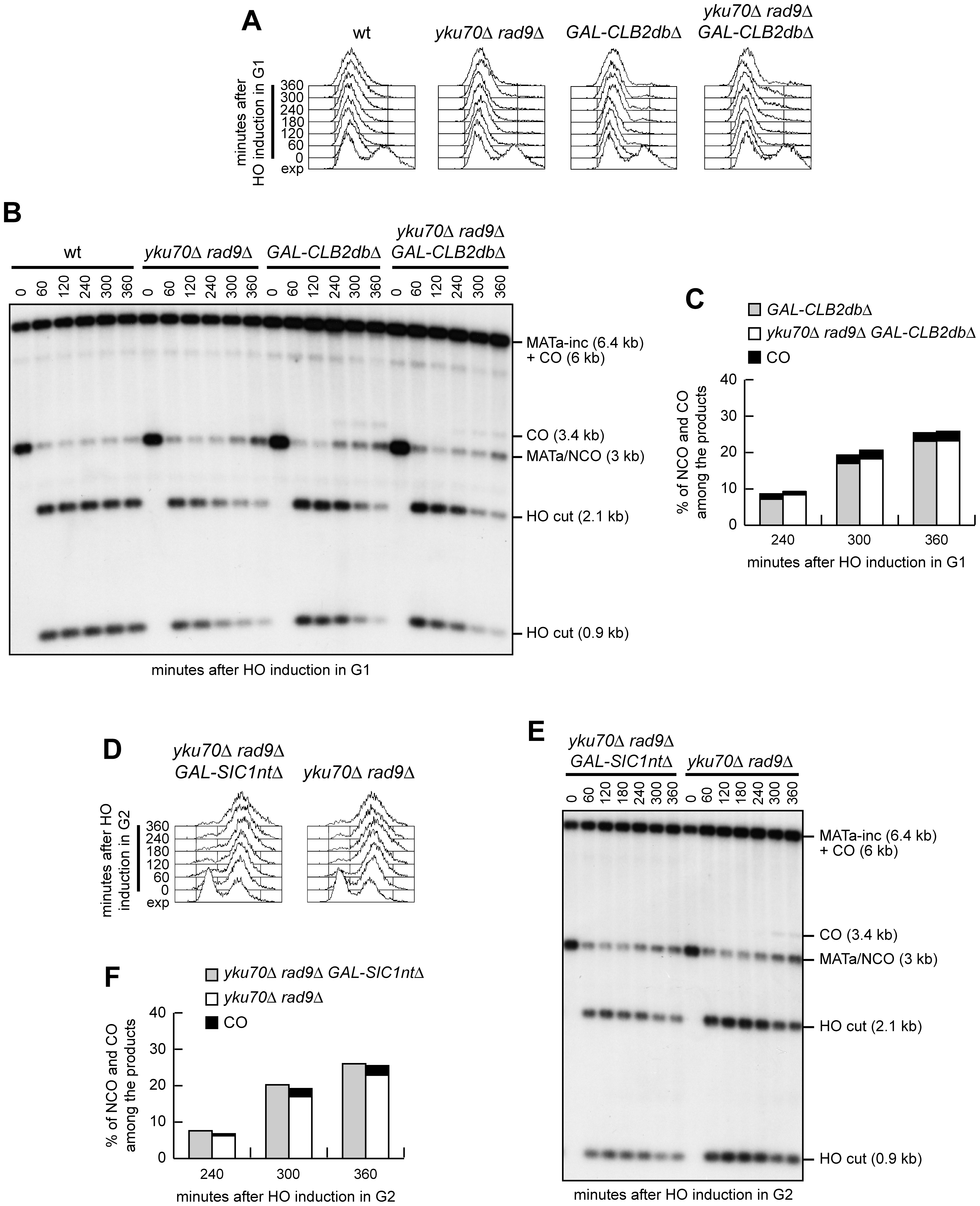 Ectopic Cdk1 activation allows crossovers in G1, whereas Cdk1 inhibition prevents crossover in G2.