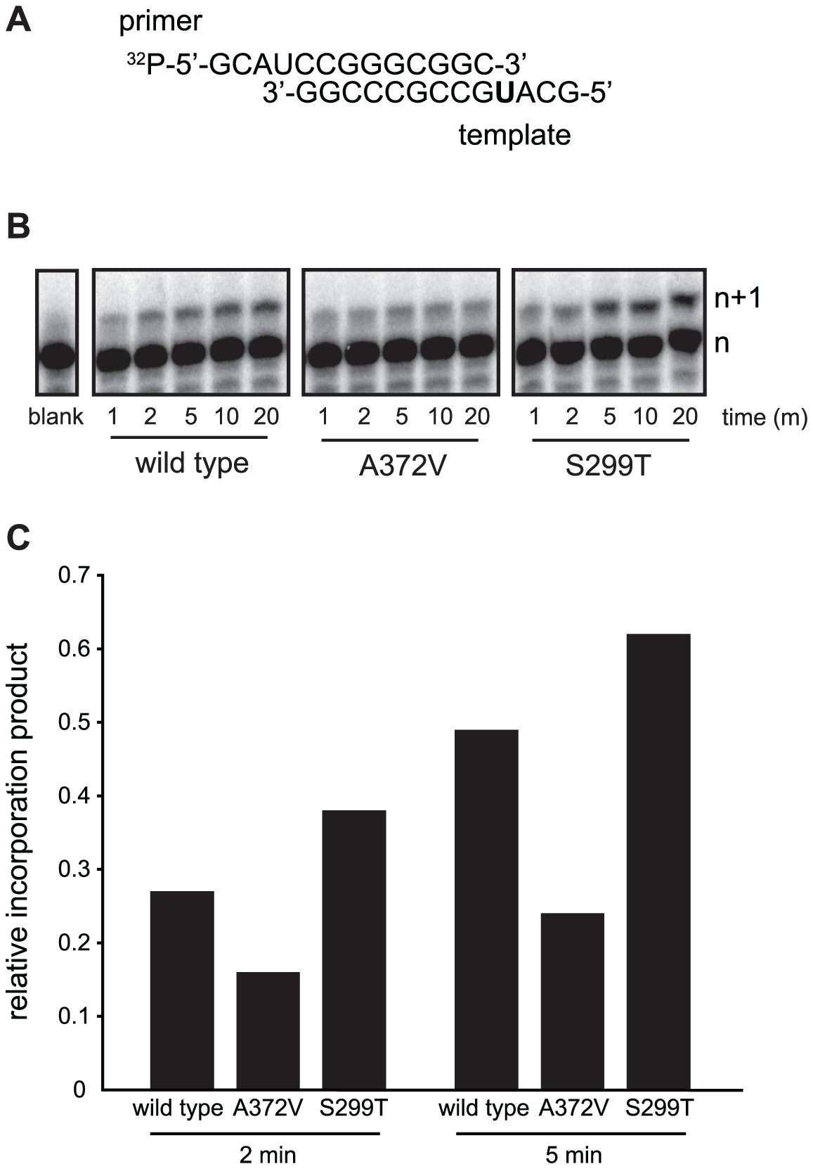 <i>In vitro</i> biochemical assays confirm the higher (A372V) and lower (S299T) incorporation fidelities of CVB3 variants.
