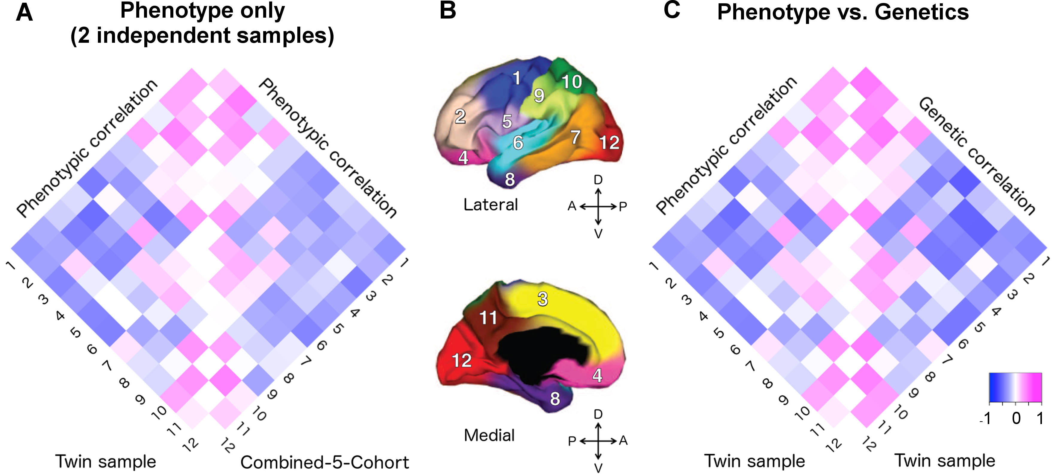 Applying the genetically based cortical parcellations to independent data.