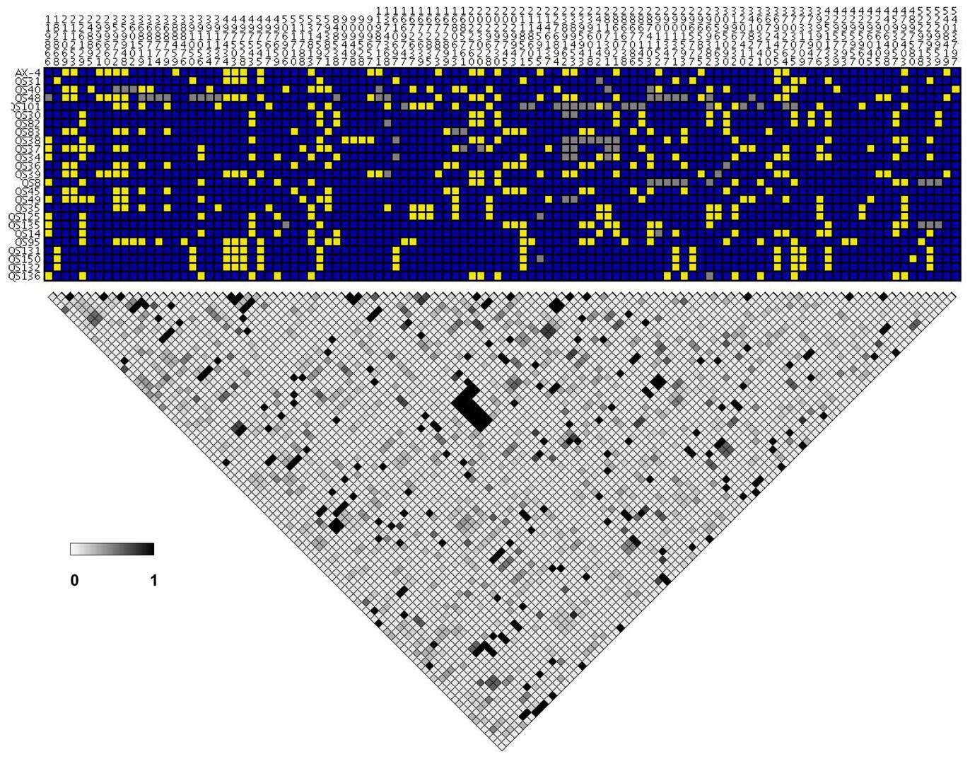 Pairwise linkage disequilibrium in chromosome 4.