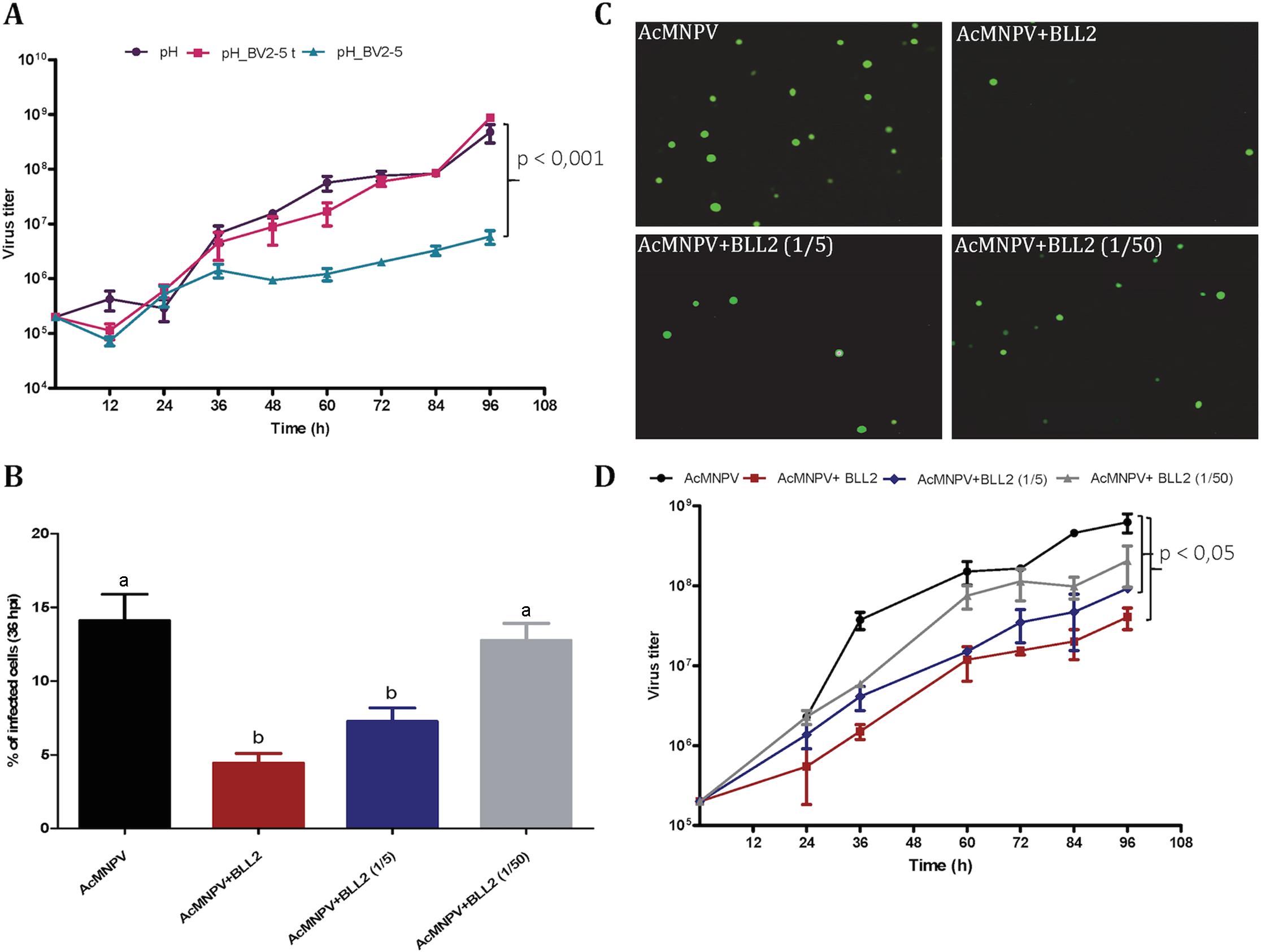<i>Spodoptera exigua</i> bracovirus-like genes affect baculovirus infection.