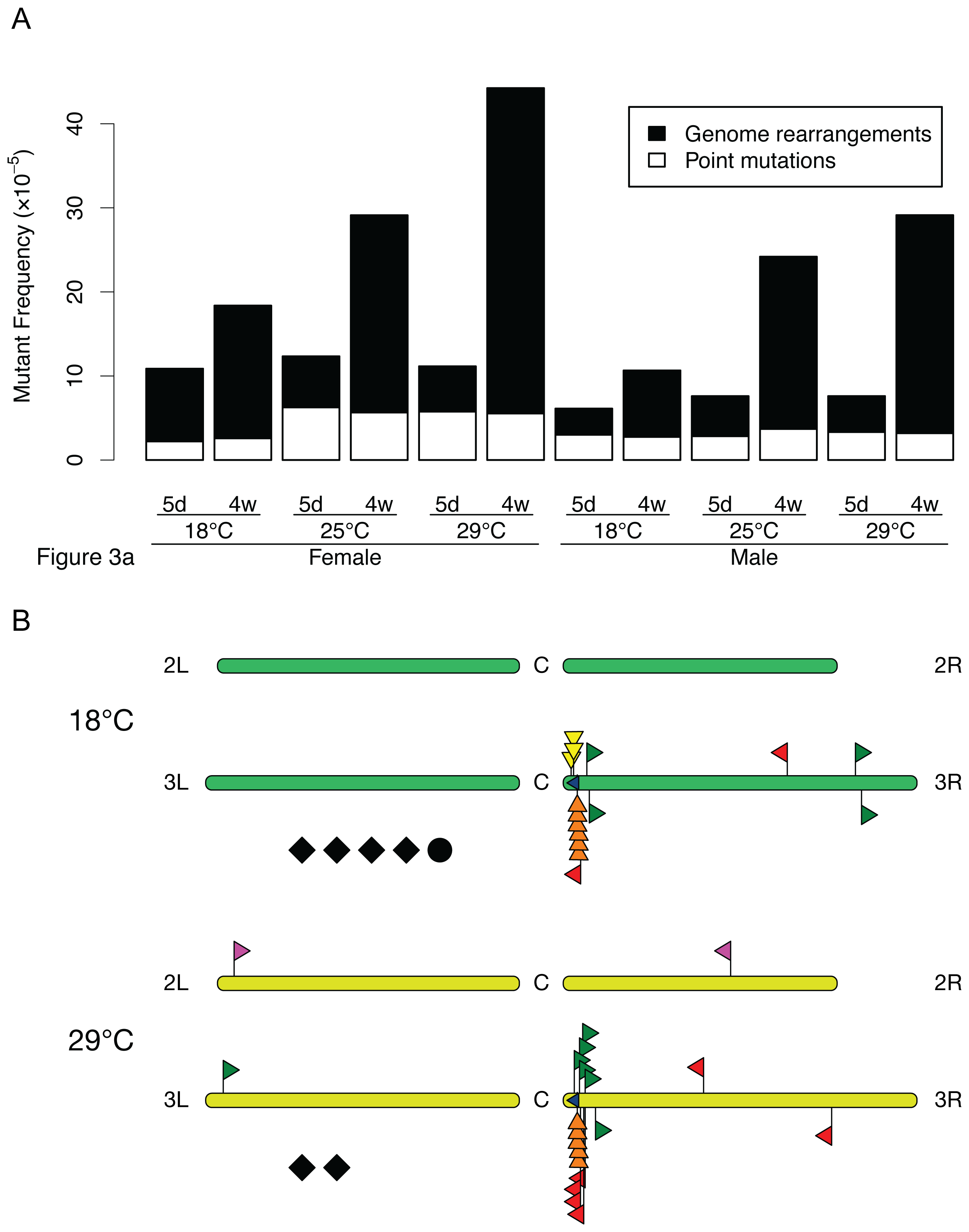 LacZ mutation spectra in <i>D. melanogaster</i> at different temperatures.