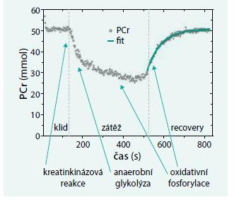 Kinetika fosfokreatinu během klidu, zátěže a recovery fáze