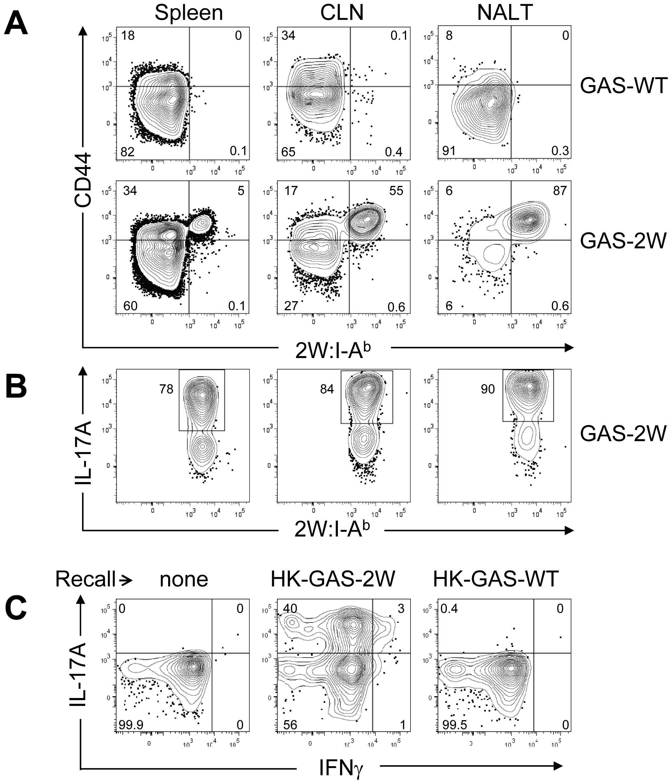 Clonal expansion of 2W:I-A<sup>b</sup>-specific CD4<sup>+</sup> T cells and recall of IL-17A is antigen-specific and not due to Superantigens produced by GAS.