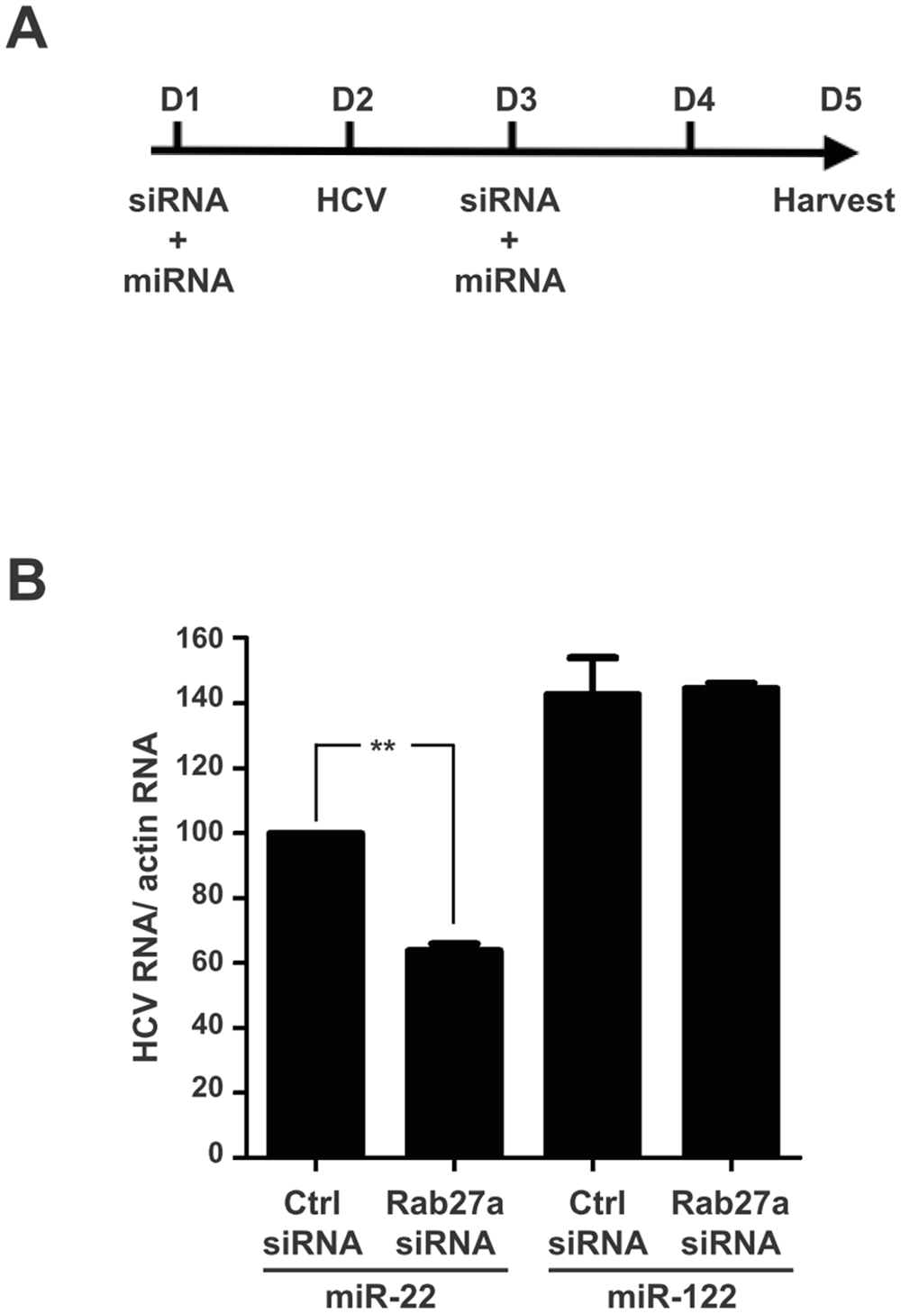 Rescue of HCV RNA in Rab27a-depleted cells by ectopic expression of miR-122.