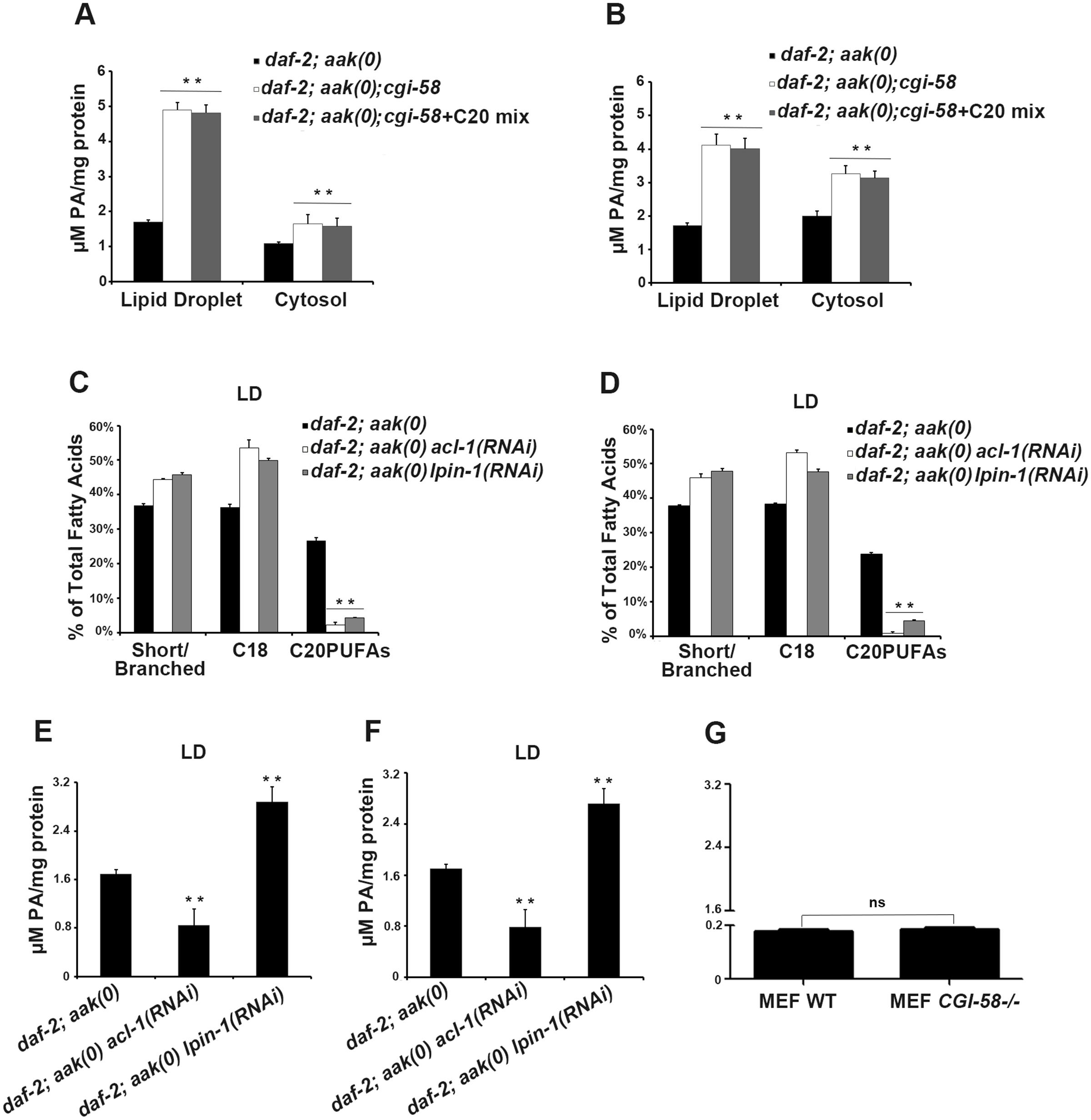 Variation in phosphatidic acid (PA) levels is associated with reduced C20PUFA abundance.