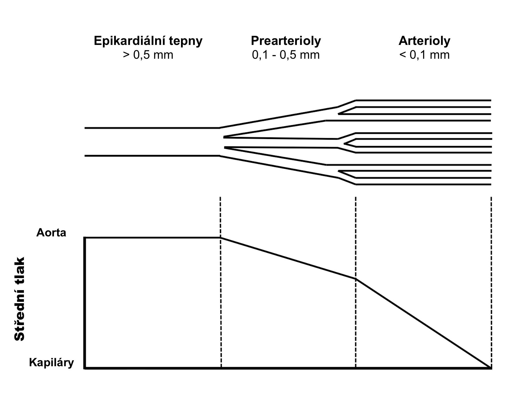 Kompartmentový model koronárního řečiště (upraveno dle: Camici et al., 2007)