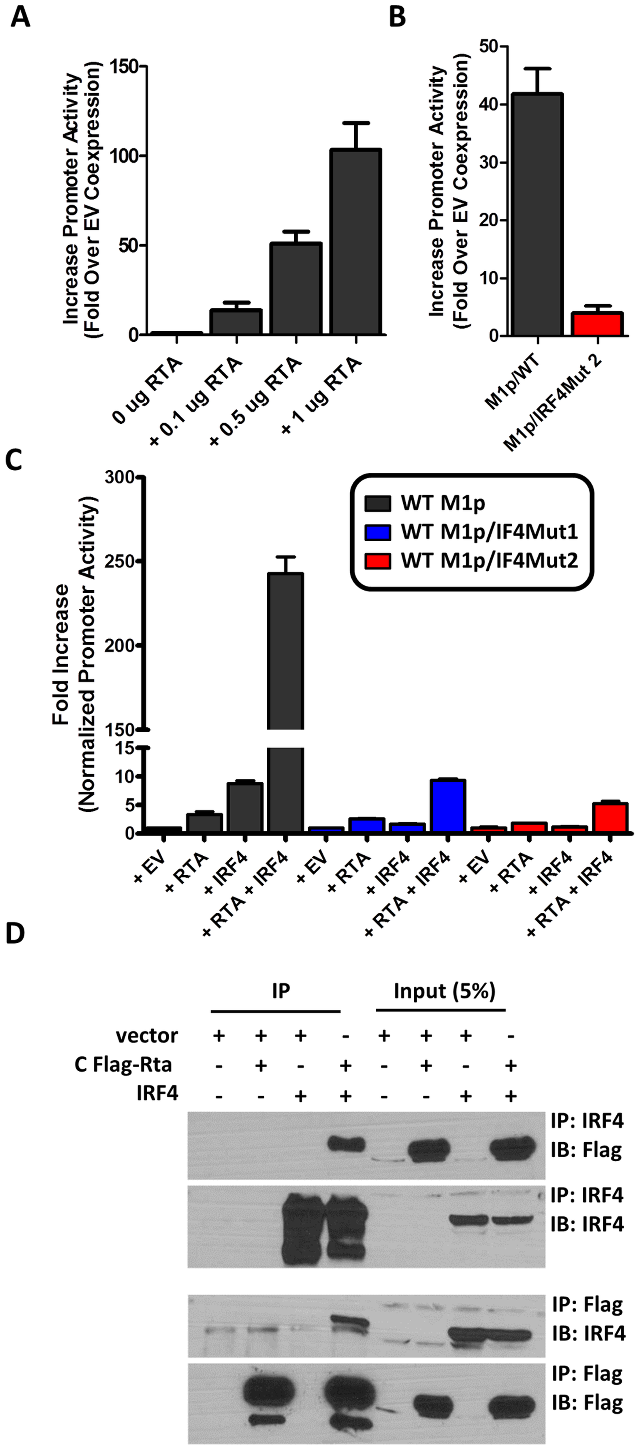 Efficient RTA transactivation of M1 promoter is dependent on a functional IRF4 binding site.