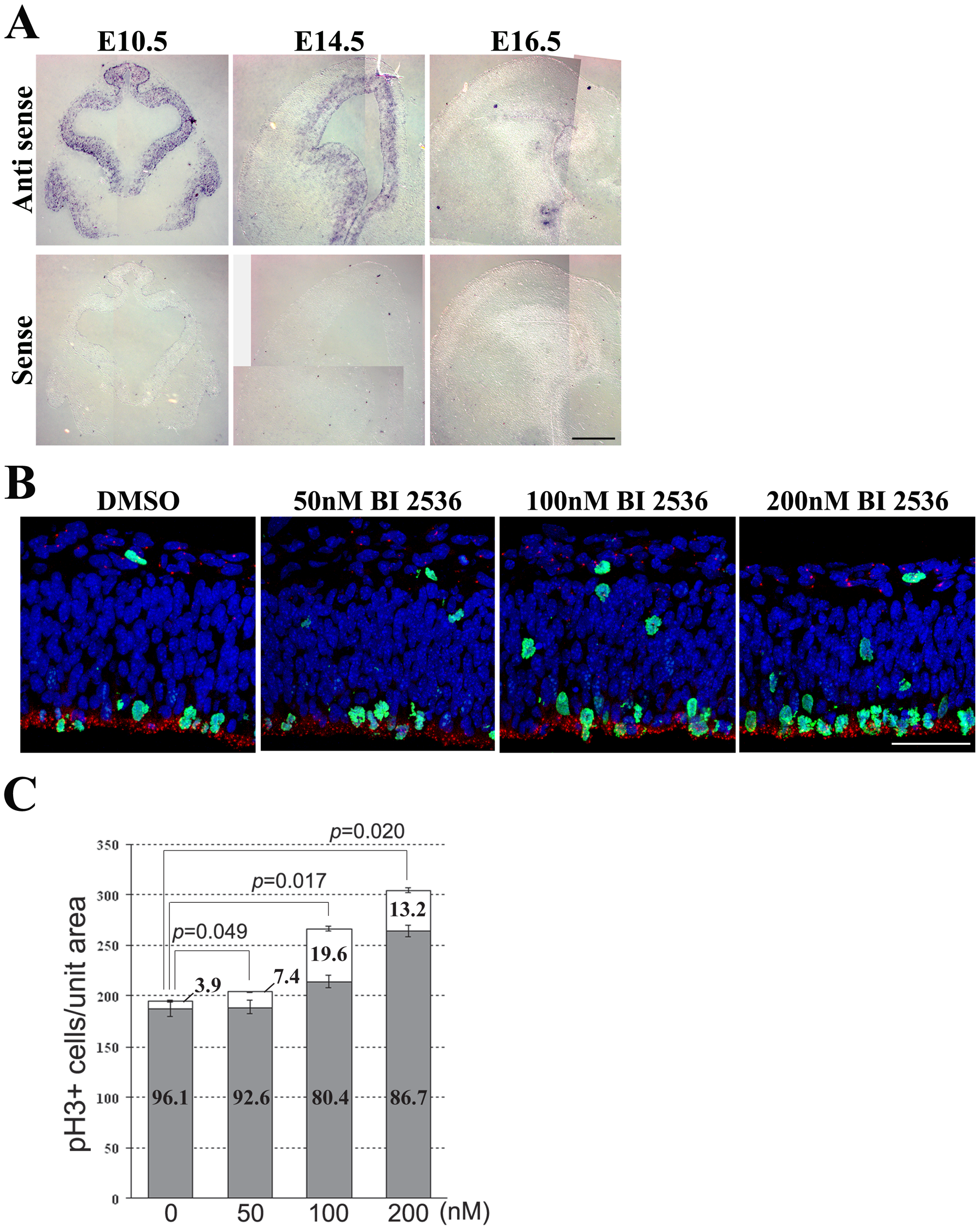 Plk1 co-operates in controlling mitotic progression and mitotic spindle orientation.