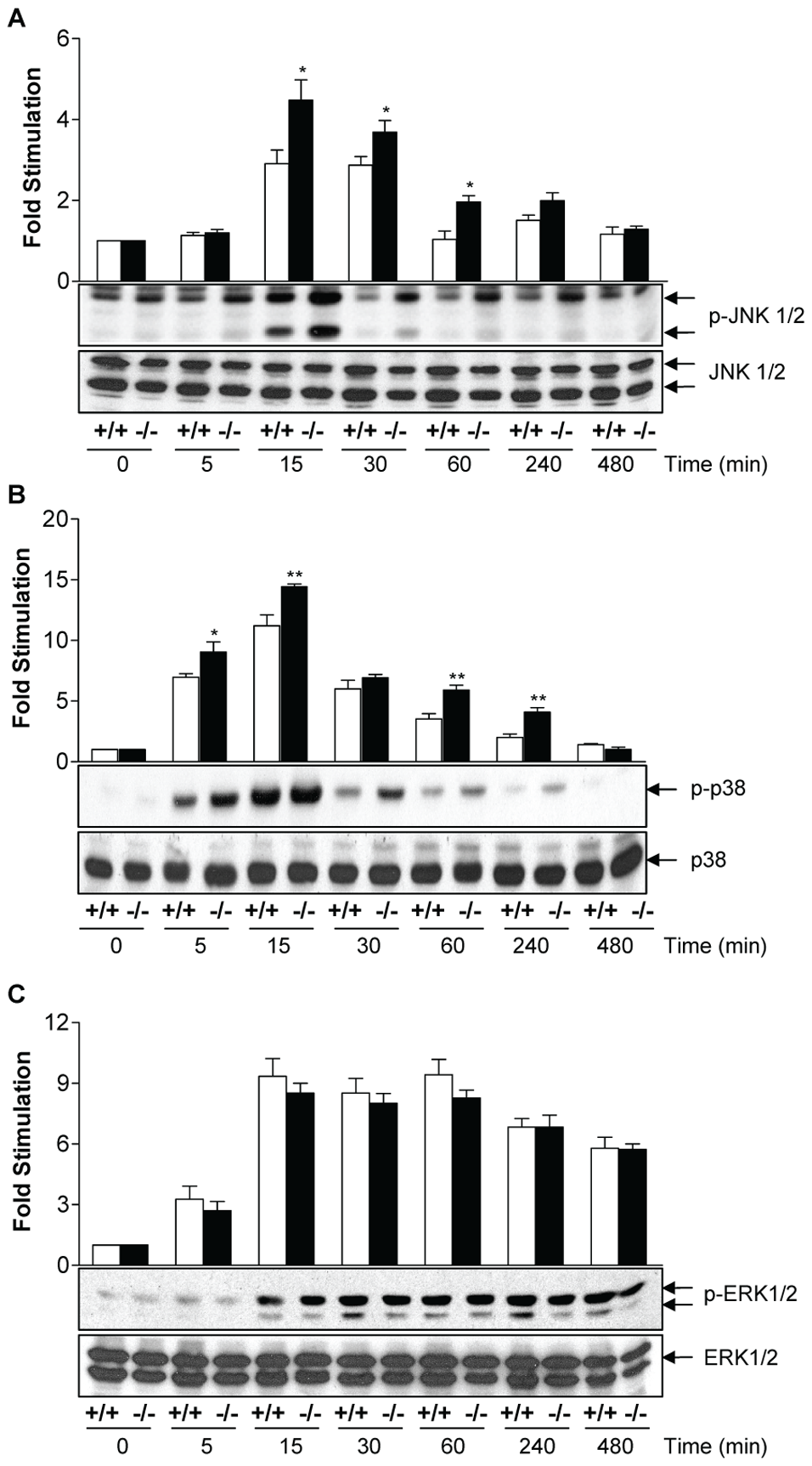 MKP-2 deletion enhances LPS -stimulated MAP kinase phosphorylation in macrophages.