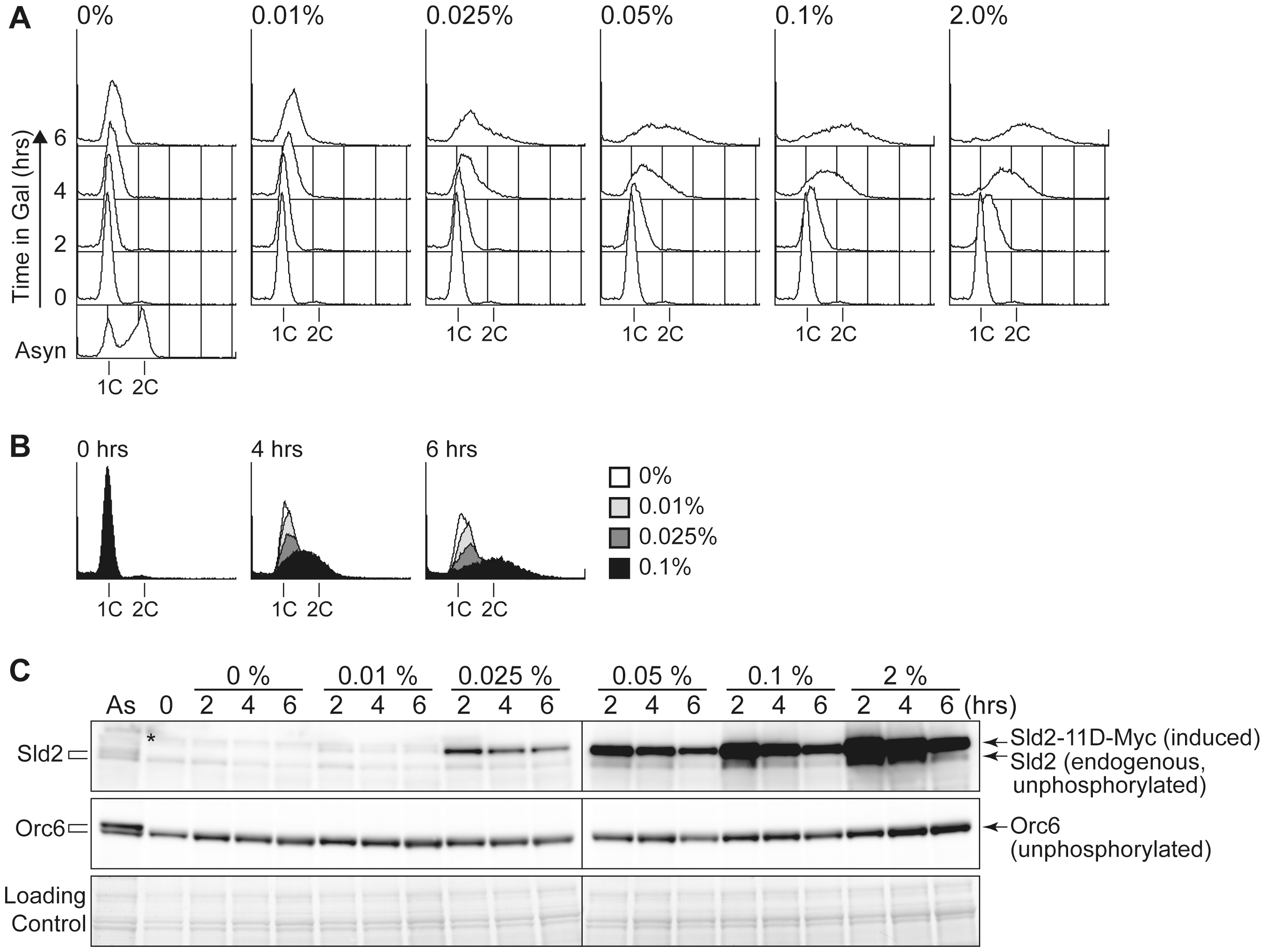 The Sld2-11D protein level is important to promote DNA replication.