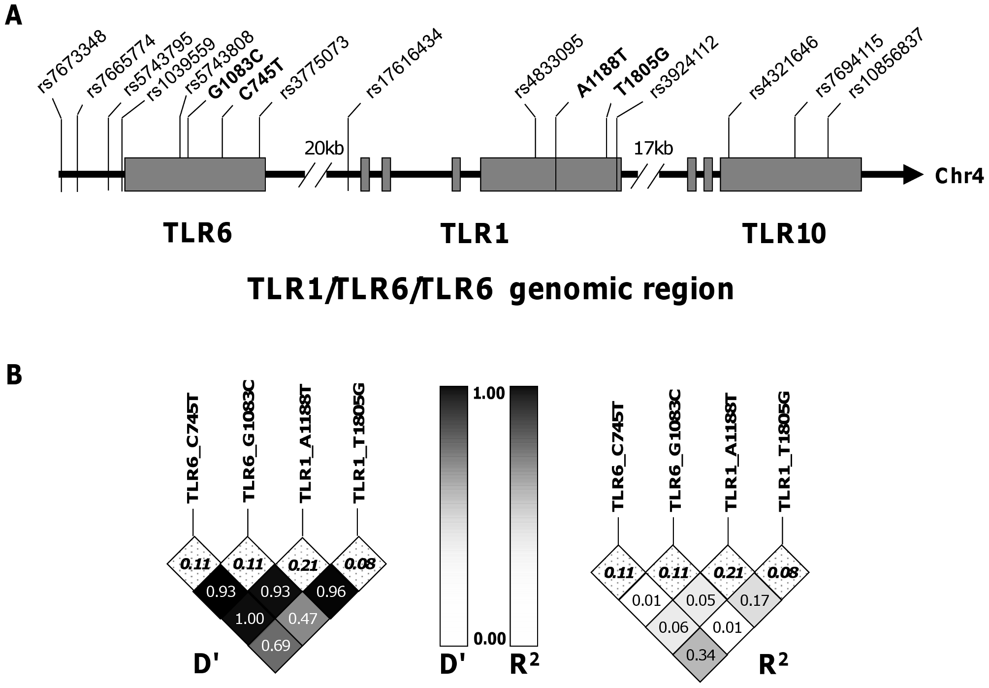 Haplotype tagging SNPs and pair-wise linkage disequilibrium analysis of TLR1-6-10 gene region.