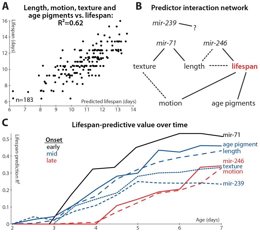 Multivariate lifespan predictions and relationships between biomarkers.