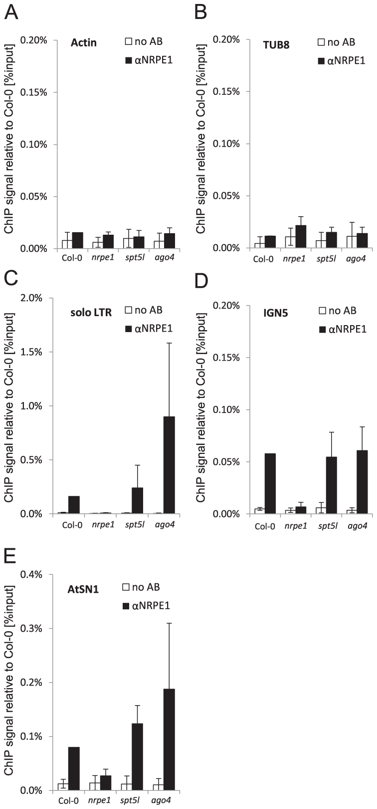 SPT5L and AGO4 are not required for Pol V binding to chromatin.