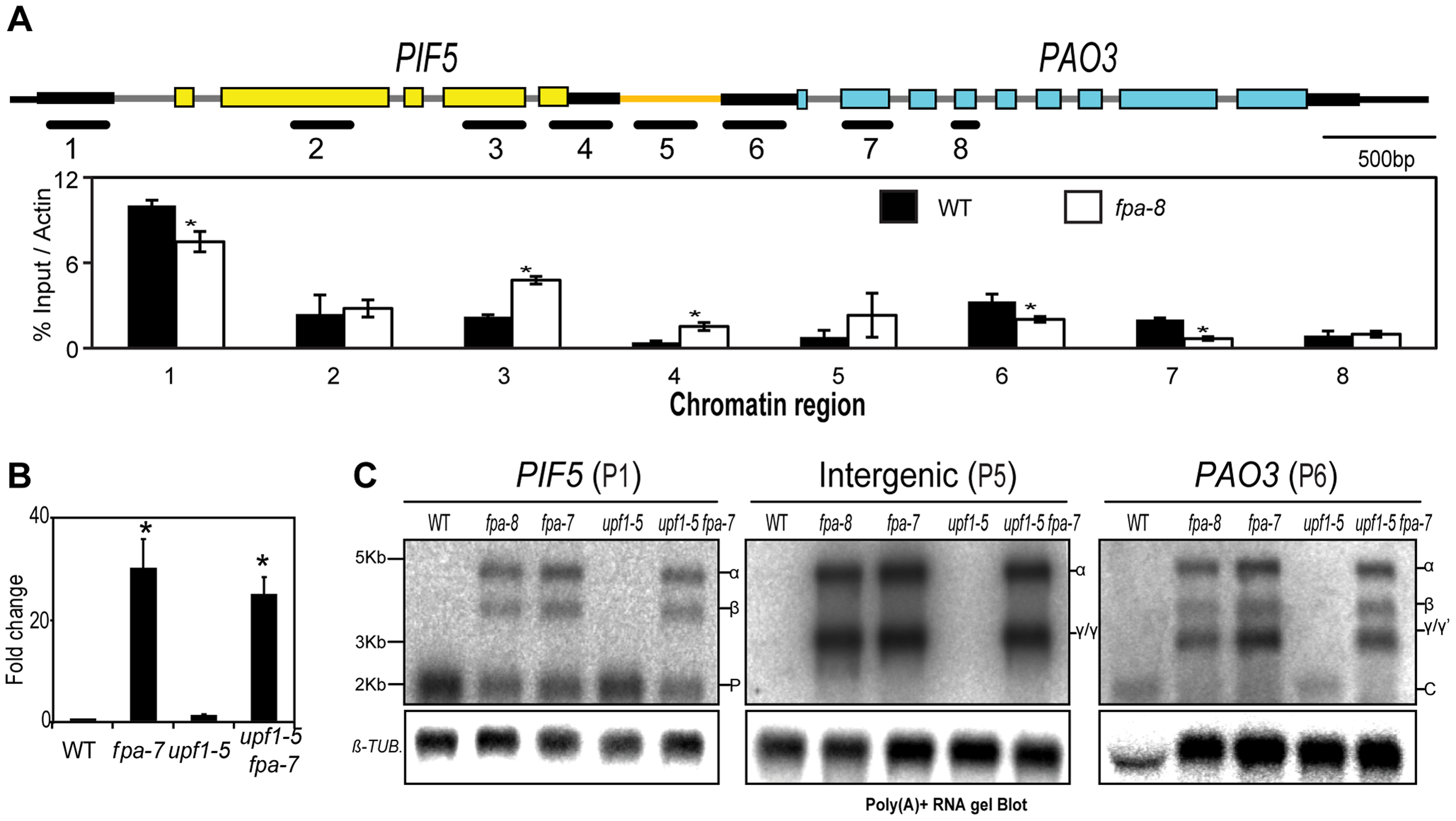 <i>PIF5–PA03</i>, an example of chimeric RNA formation controlled by FPA.