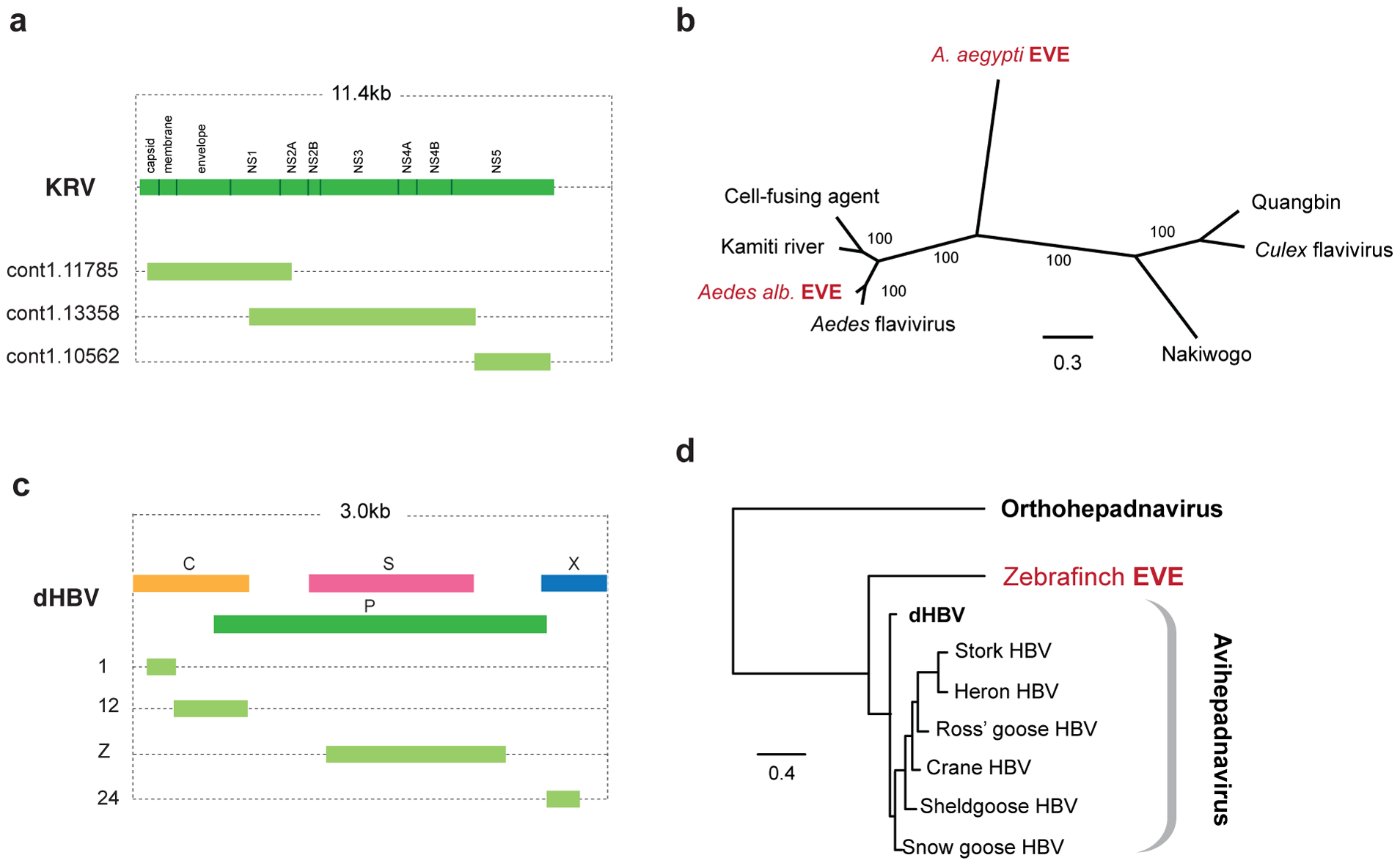 Genetic structures and phylogenetic relationships of EVEs related to flaviviruses and hepadnaviruses.