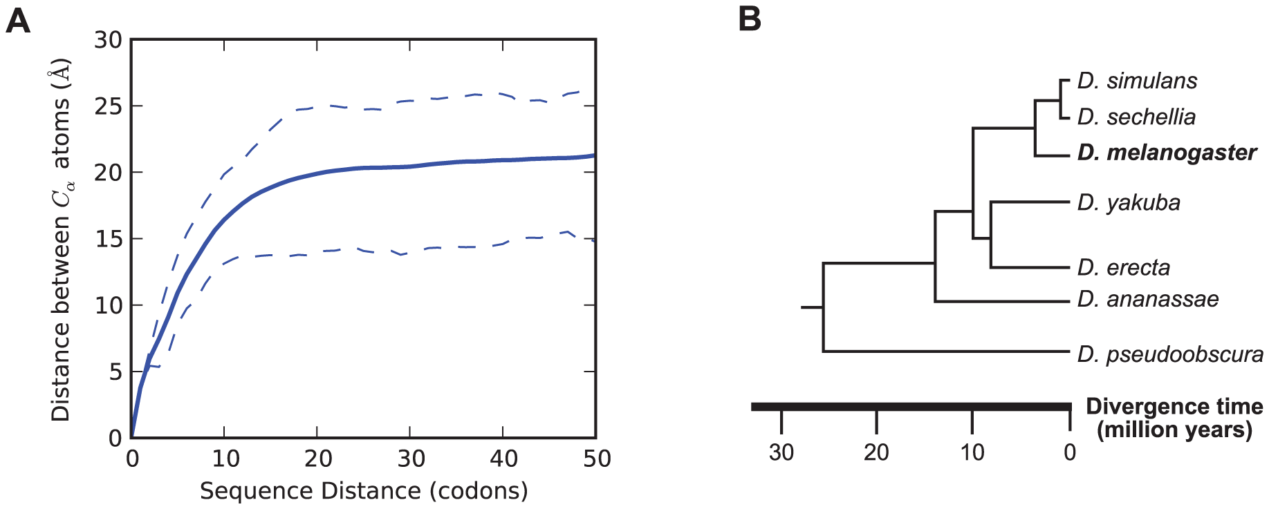 Structural distance as a function of sequence distance and Drosophilid phylogeny.