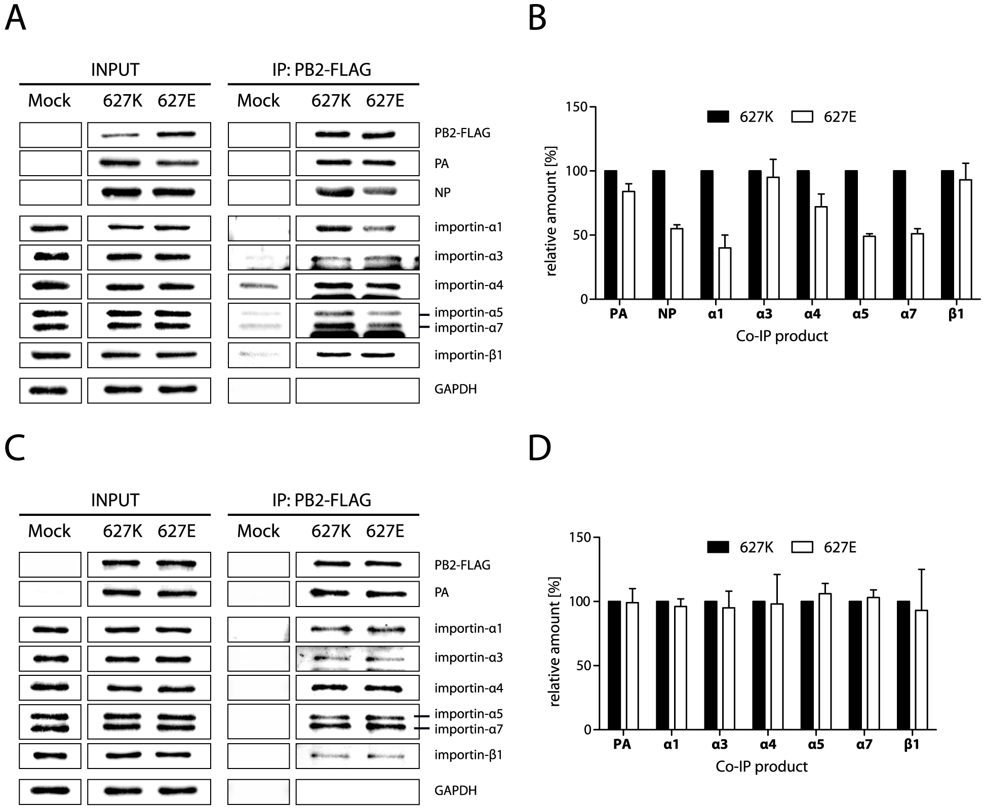 NP mediates increased binding of importins to PB2-627K containing vRNPs.