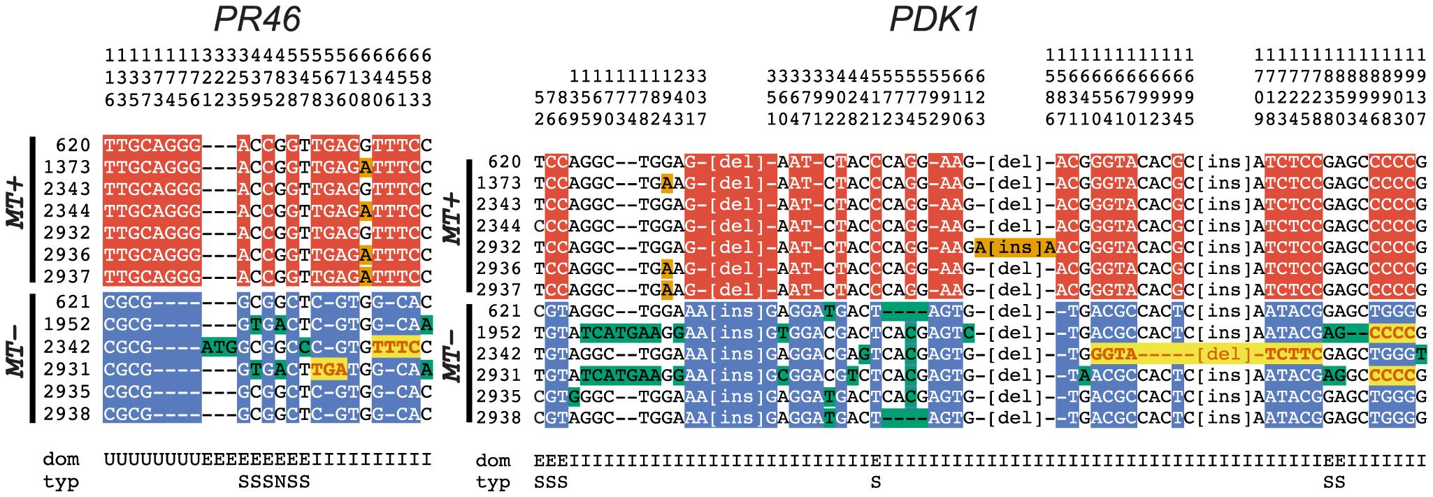 R-domain gene conversion between <i>MT</i>+ and <i>MT−</i> haplotypes.