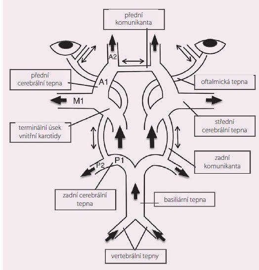 Schematické znázornění cerebrální kolaterální cirkulace Willisovým okruhem a oftalmickými tepnami.