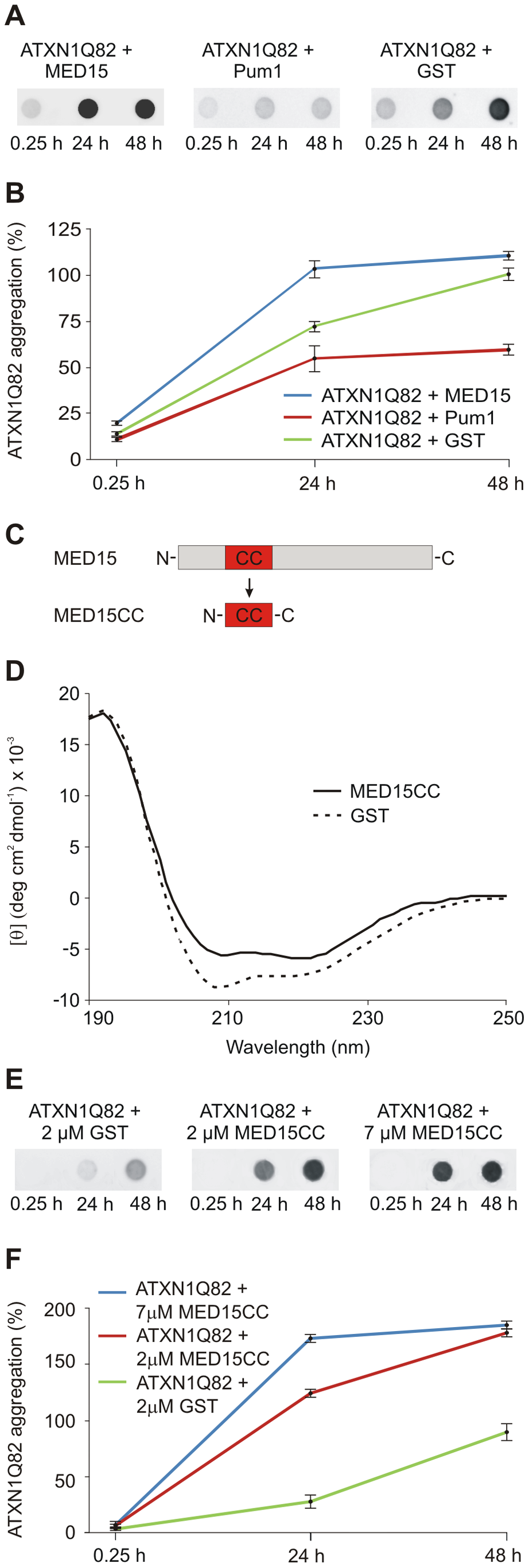 The N-terminal CC domain in MED15 enhances polyQ-mediated ATXN1 aggregation in cell-free assays.