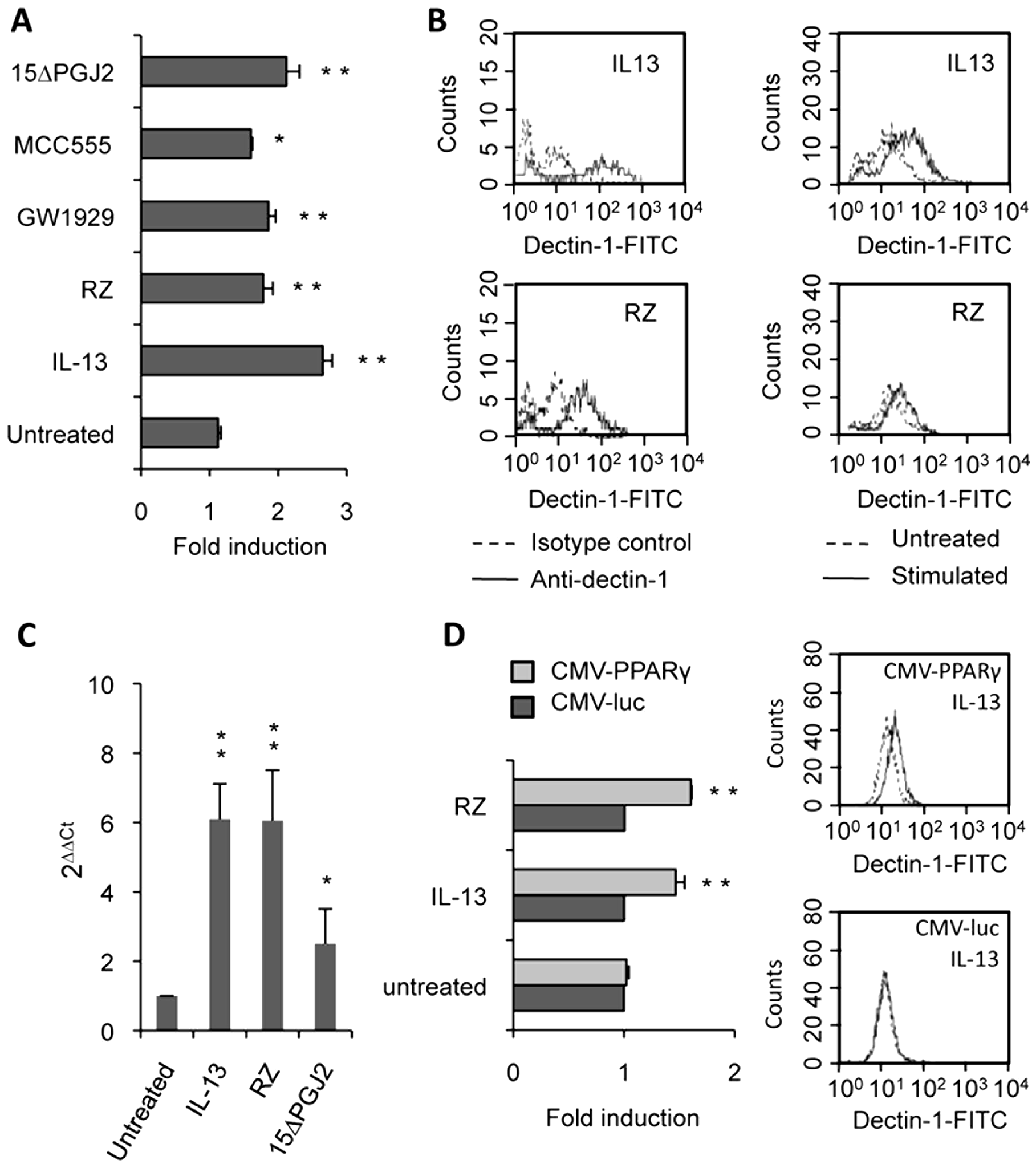 Dectin-1 expression depends on PPARγ activation by IL-13 or PPARγ-specific ligands.