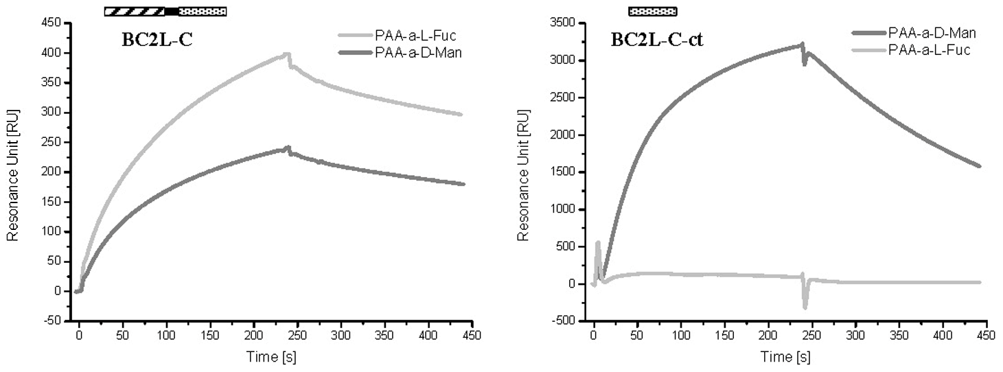 SPR sensorgrams of BC2L-C and C-ter domain on different monosaccharide-activated surfaces.