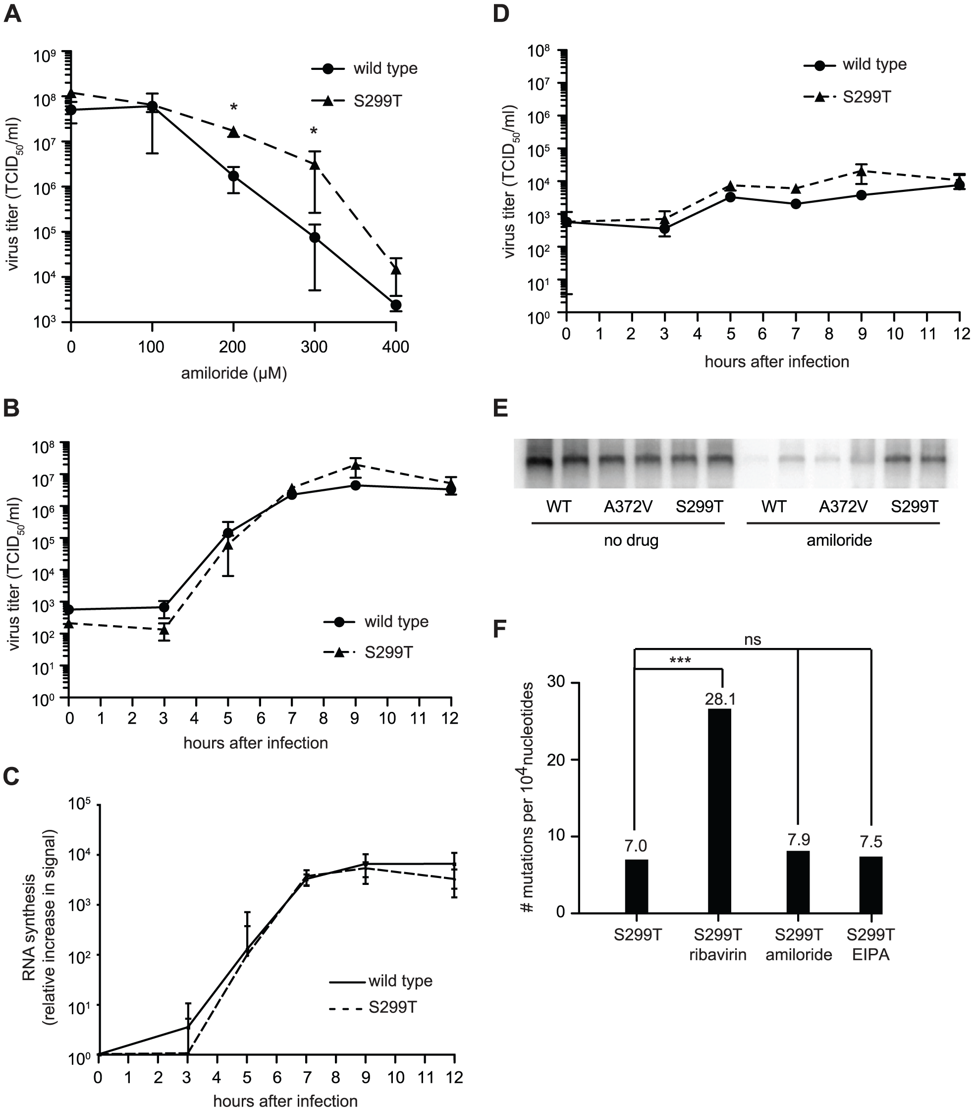 Another polymerase variant, S299T, is resistant to both the inhibitory effect of amiloride on RNA synthesis as well as its mutagenic activity.