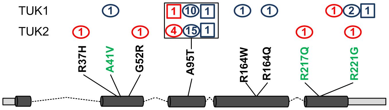 SNVs identified in gene <i>GZMM</i>.