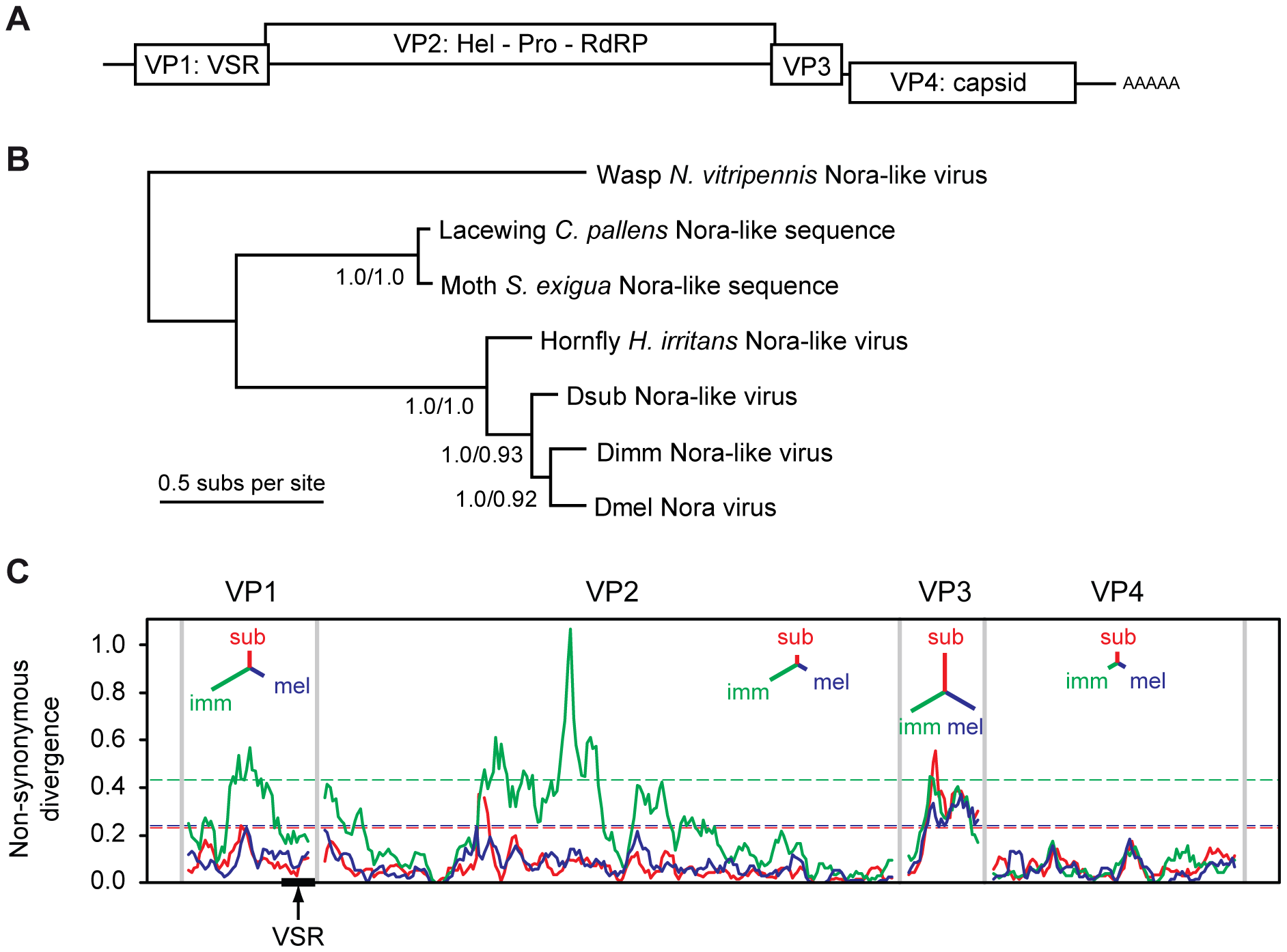 Phylogenetic analysis and non-synonymous divergence between Nora viruses.