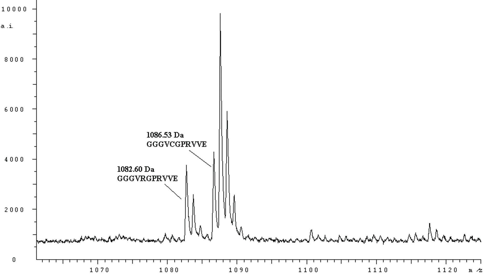 MH<sup>+</sup> spektrum peptidů fibrinogenu Nový Jičín (štěpeno endopeptidasou Glu-C) odpovídající sekvenci Aα 12 – 22