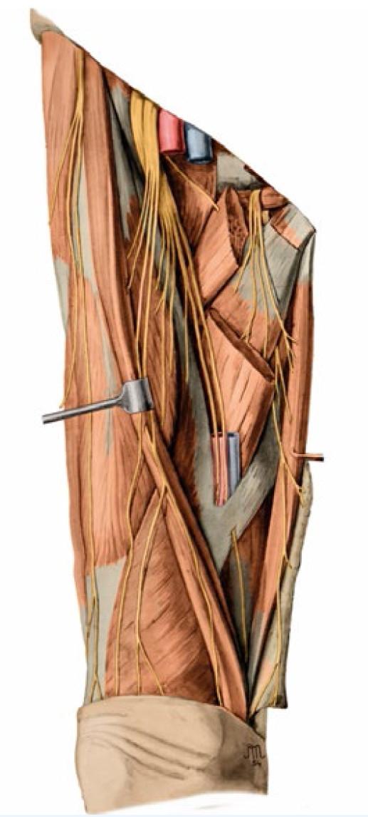 Rekonstrukce předchozího obrazu provedená I. Helekalem v roce 2014 pro současný anatomický atlas