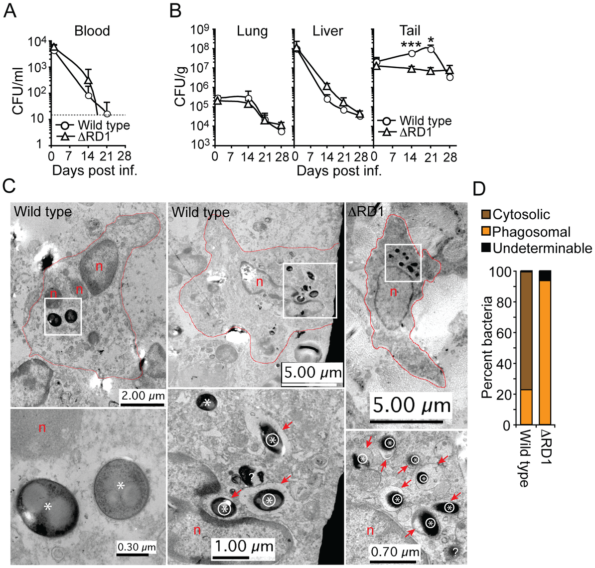 Esx-1 promotes bacterial growth and phagosome escape in tails of infected mice.