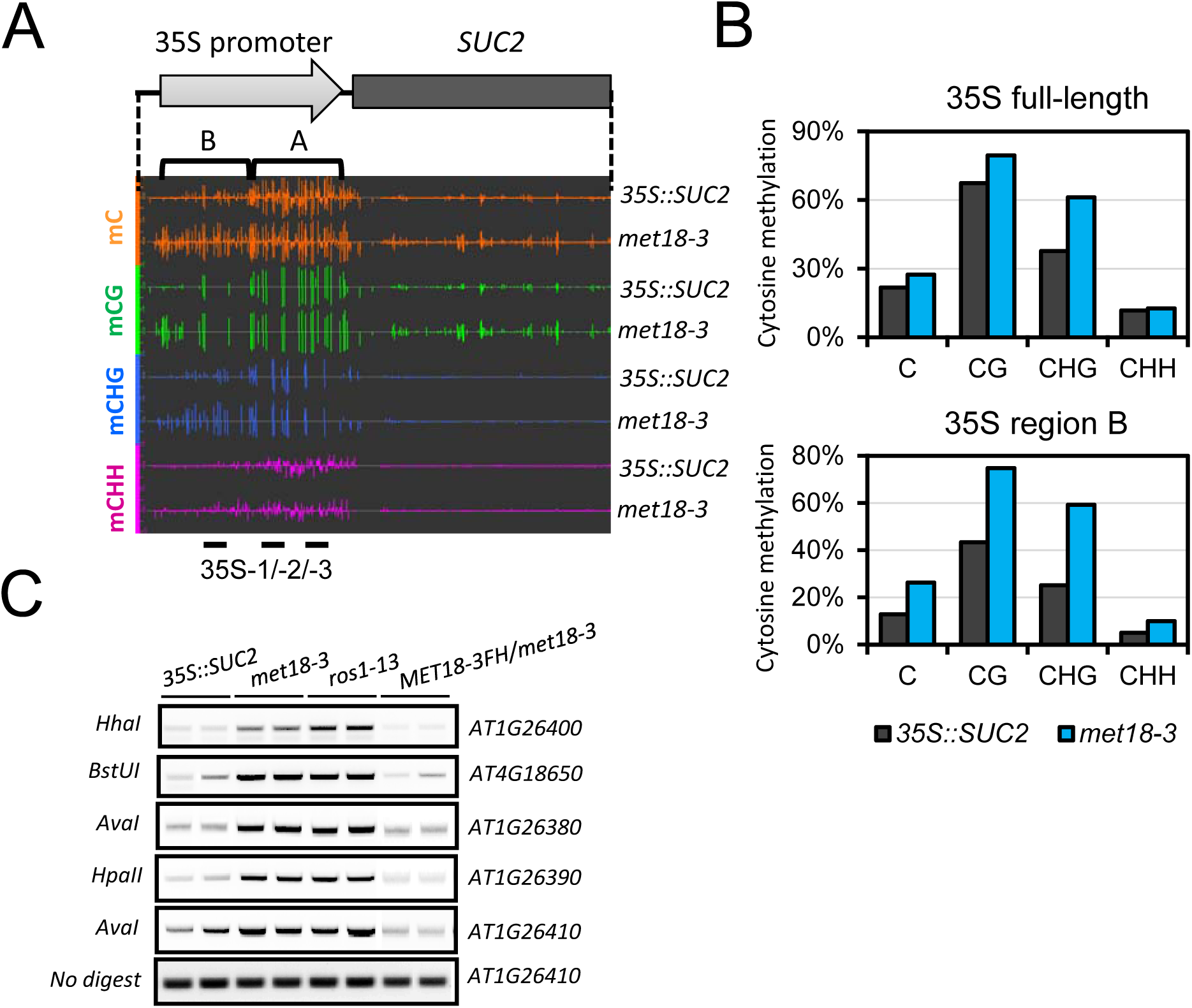 Epigenetic modification changes of the <i>35S</i>::<i>SUC2 transgene</i> promoter in <i>met18-3</i> mutant.