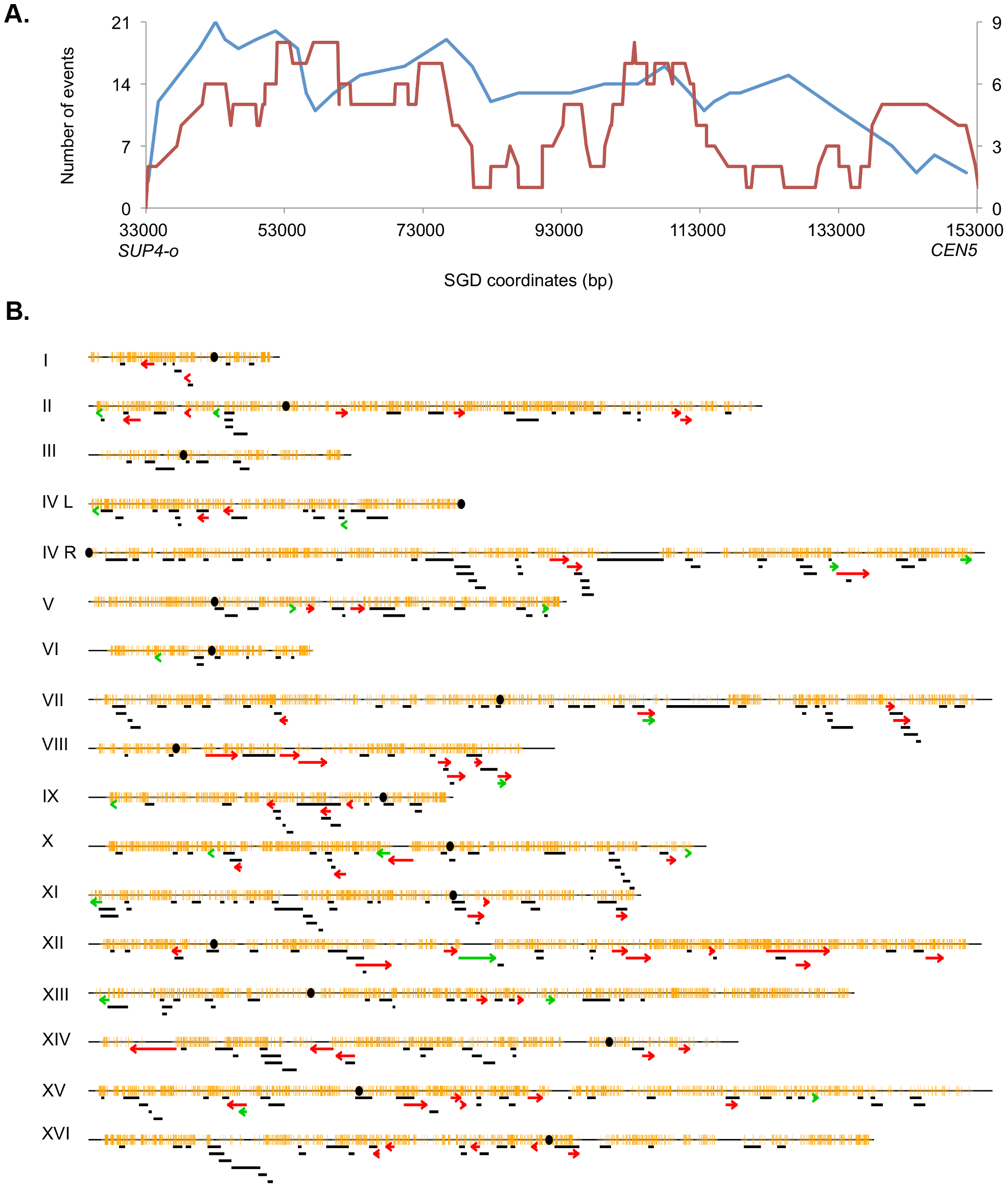Patterns of selected events on chromosome V and unselected events throughout the genome.