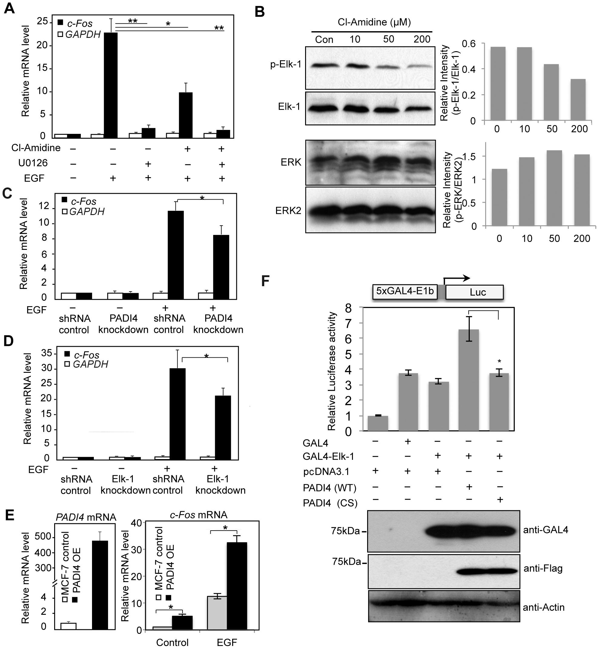 PADI4 mediates expression of the Elk-1 target gene <i>c-Fos</i>.