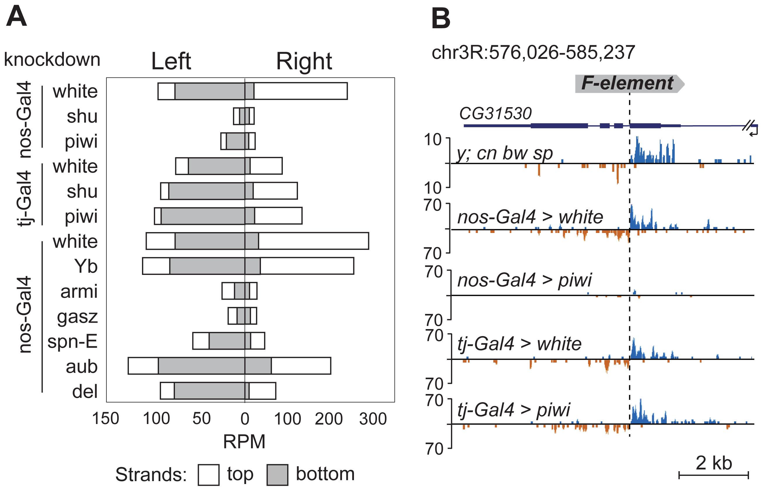 TE-flanking regions produce genuine piRNAs.