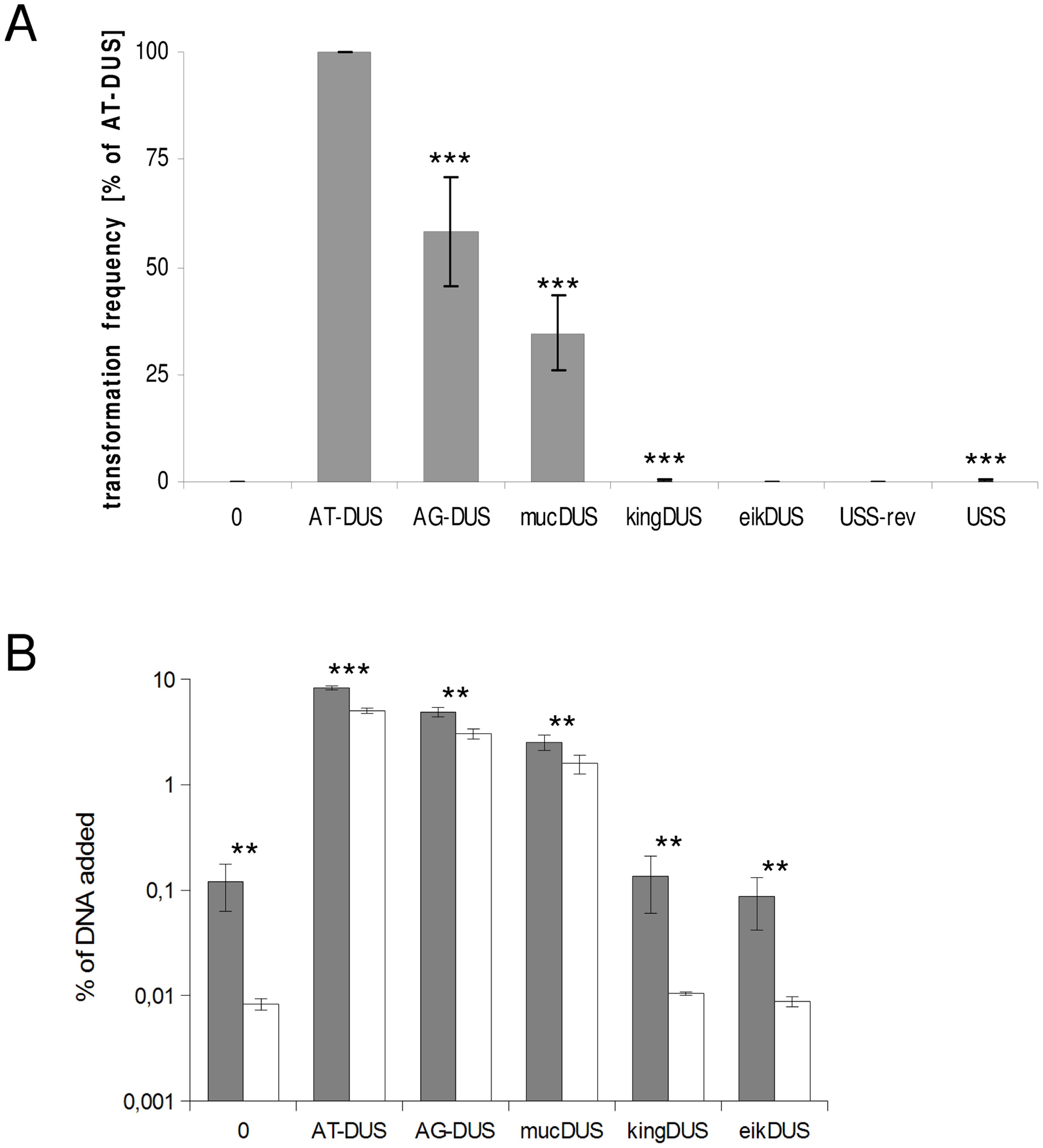 Quantitative transformation of <i>N. meningitidis</i> and binding and uptake of DNA with DUS from other <i>Neisseriaceae.</i>