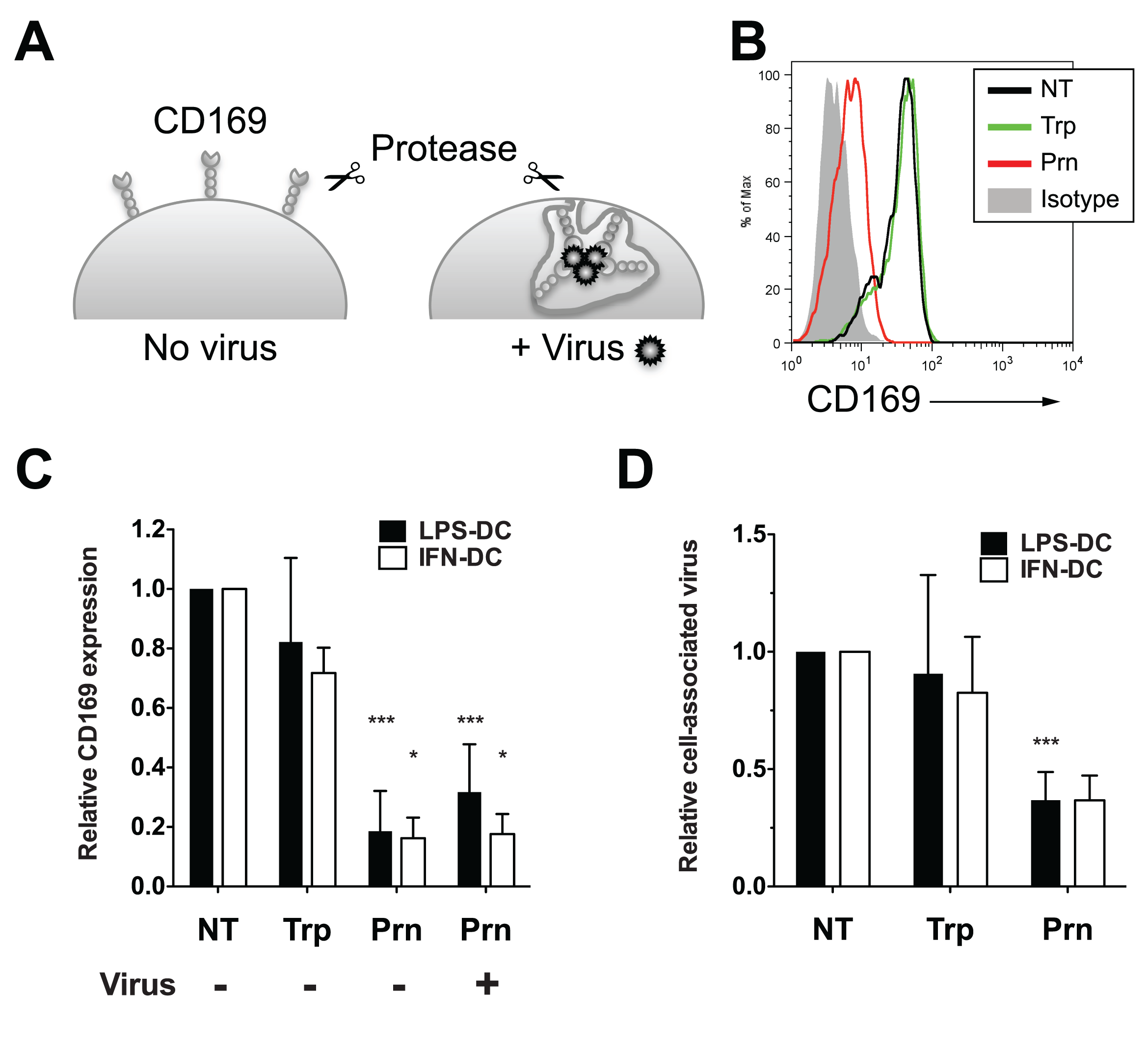 Virus particles localized within CD169<sup>+</sup> VCCs in mature DCs are susceptible to pronase.