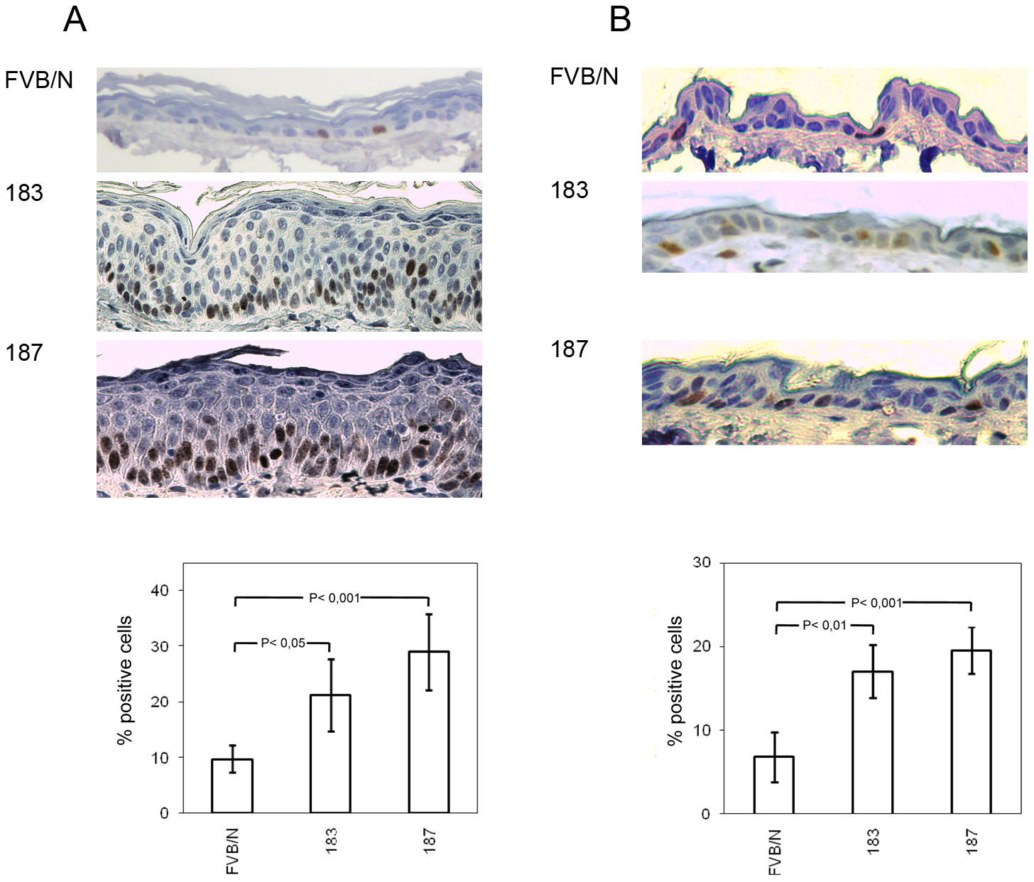 Analysis of cellular proliferation in the ear and dorsal skin of wild-type and transgenic mice.
