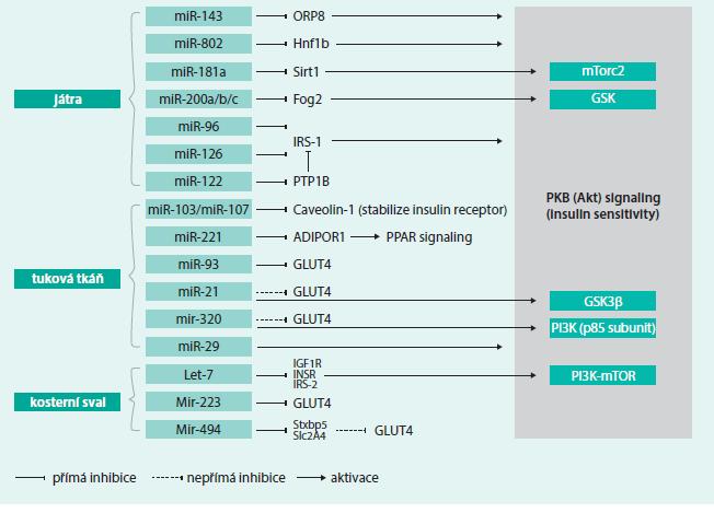 Schéma 2. MiRNA uplatňující se v účinku inzulinu (IR/IS). Upraveno podle [8].