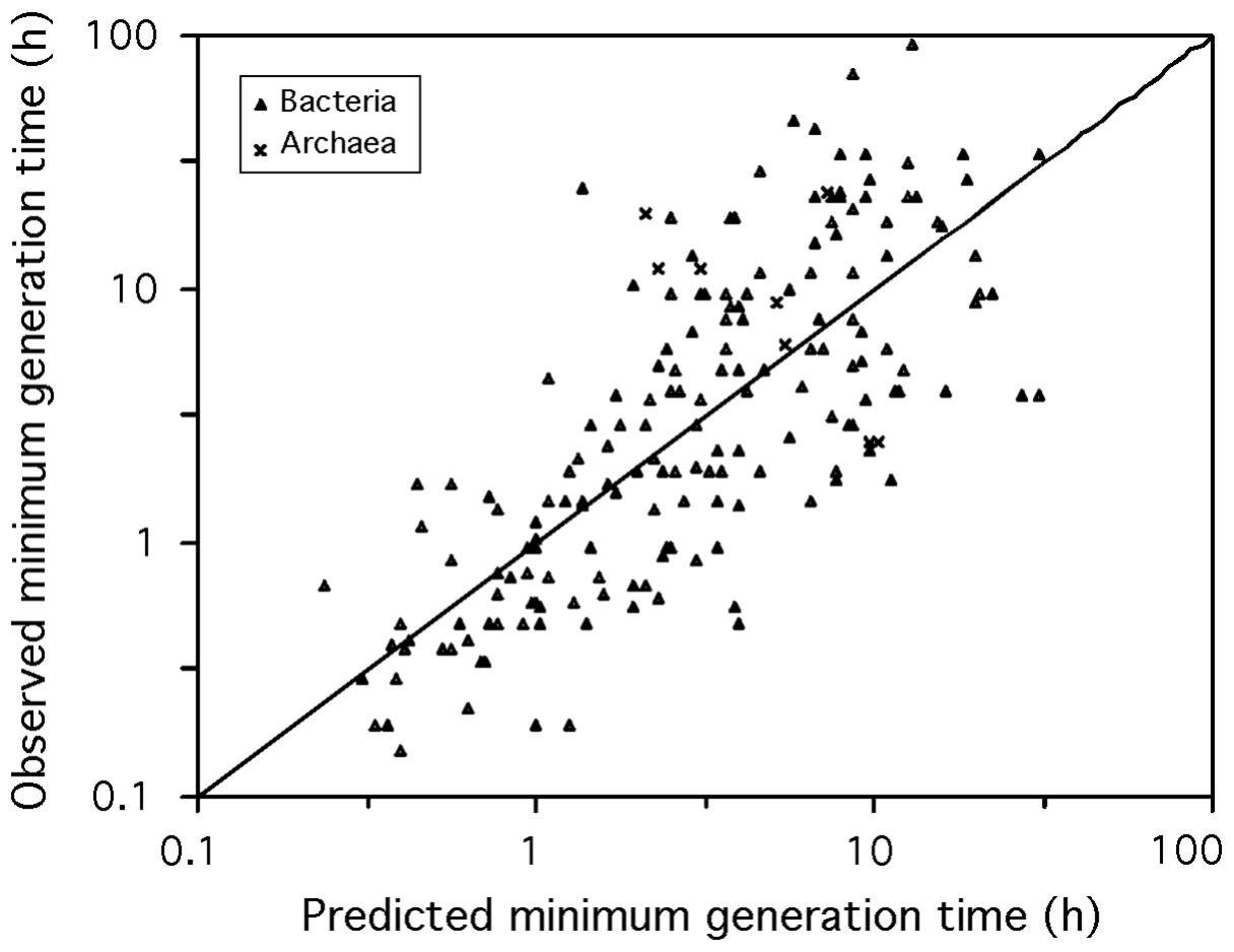 Observed versus predicted minimum generation time.