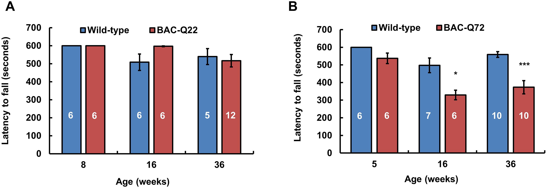 Motor phenotype of <i>ATXN2</i> BAC transgenic mice on the accelerating rotarod.