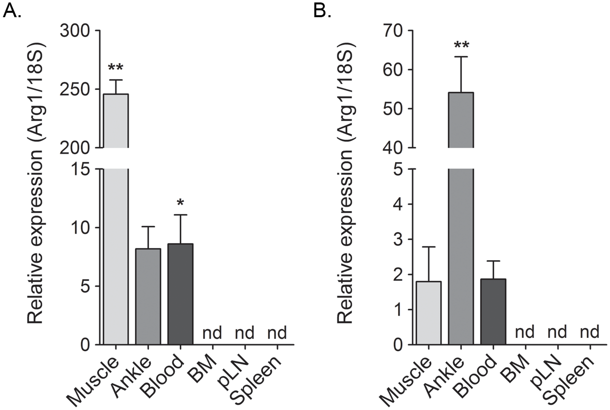 Arg1 is induced in inflamed musculoskeletal tissues and in blood leukocytes but not lymphoid tissues of RRV- and CHIKV-infected mice.